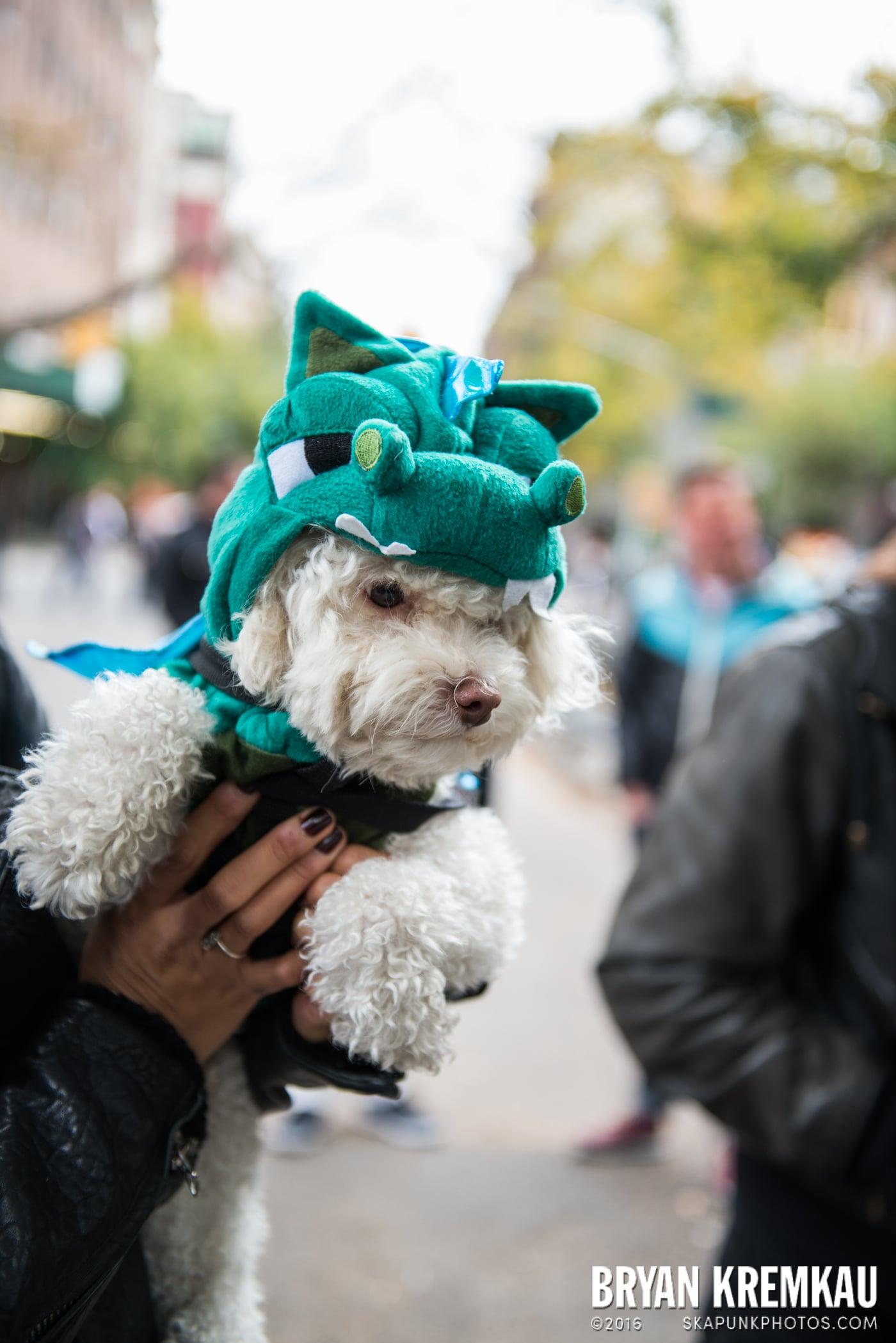 Tompkins Square Halloween Dog Parade 2015 @ Tompkins Square Park, NYC – 10.24.15 (34)