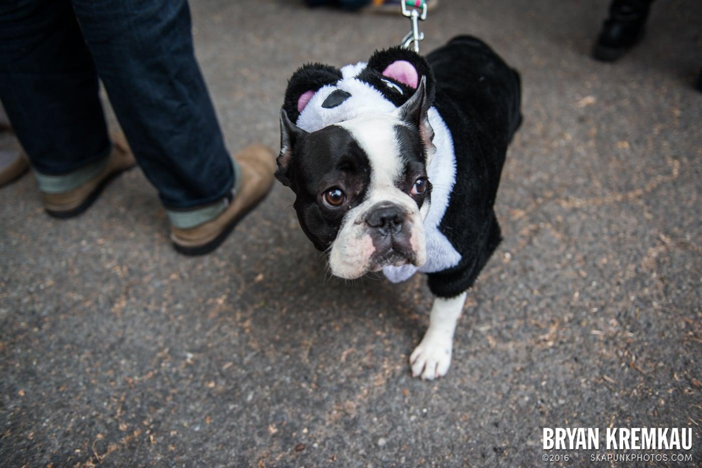 Tompkins Square Halloween Dog Parade 2015 @ Tompkins Square Park, NYC – 10.24.15 (32)