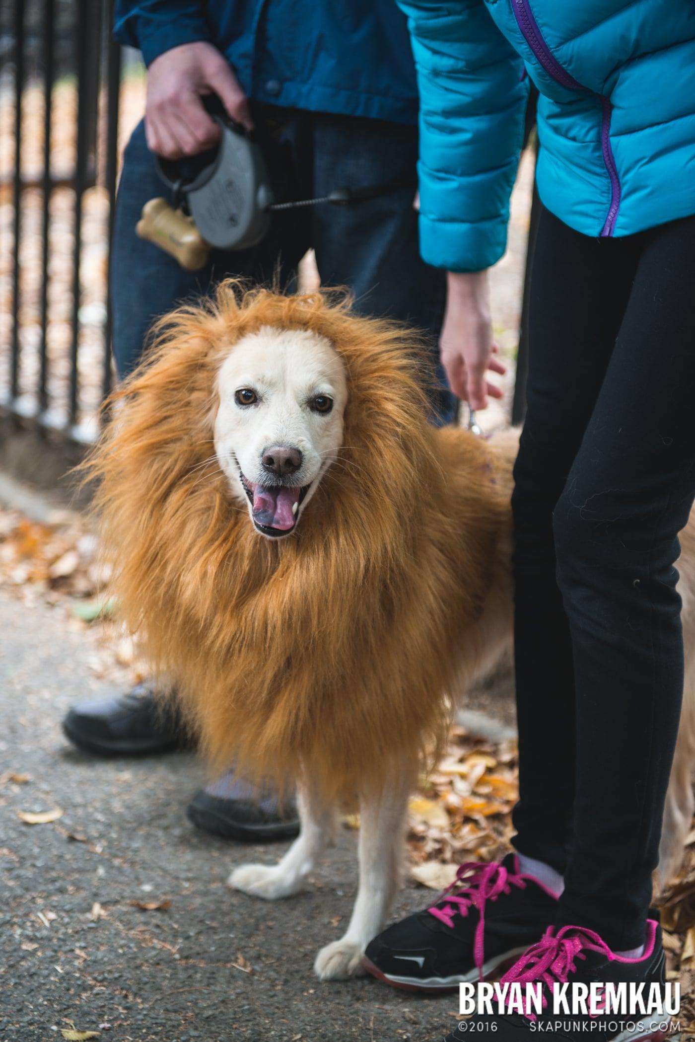 Tompkins Square Halloween Dog Parade 2015 @ Tompkins Square Park, NYC – 10.24.15 (31)