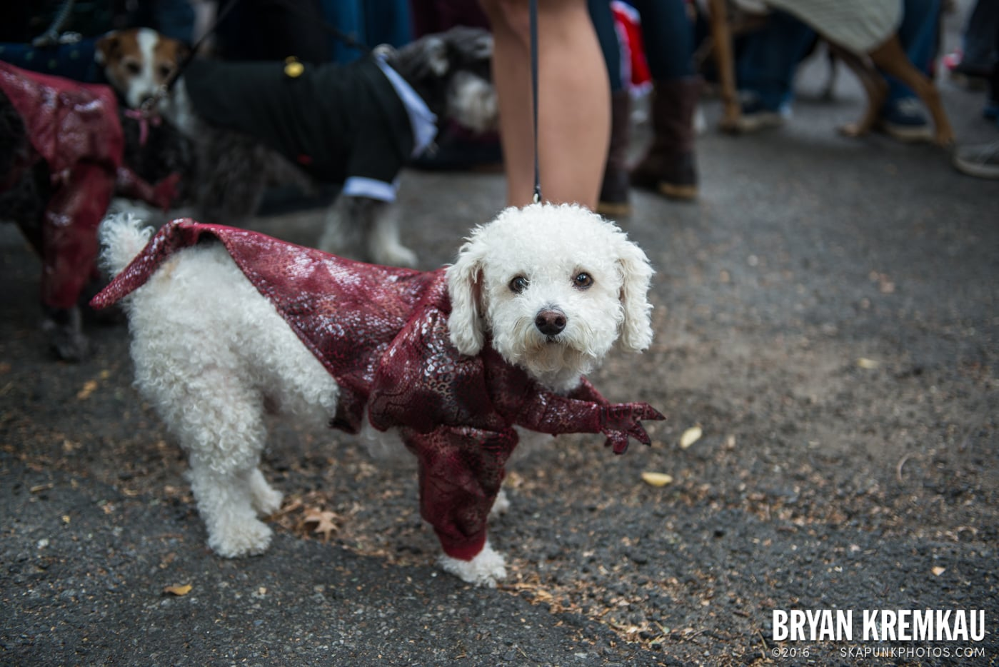 Tompkins Square Halloween Dog Parade 2015 @ Tompkins Square Park, NYC – 10.24.15 (29)