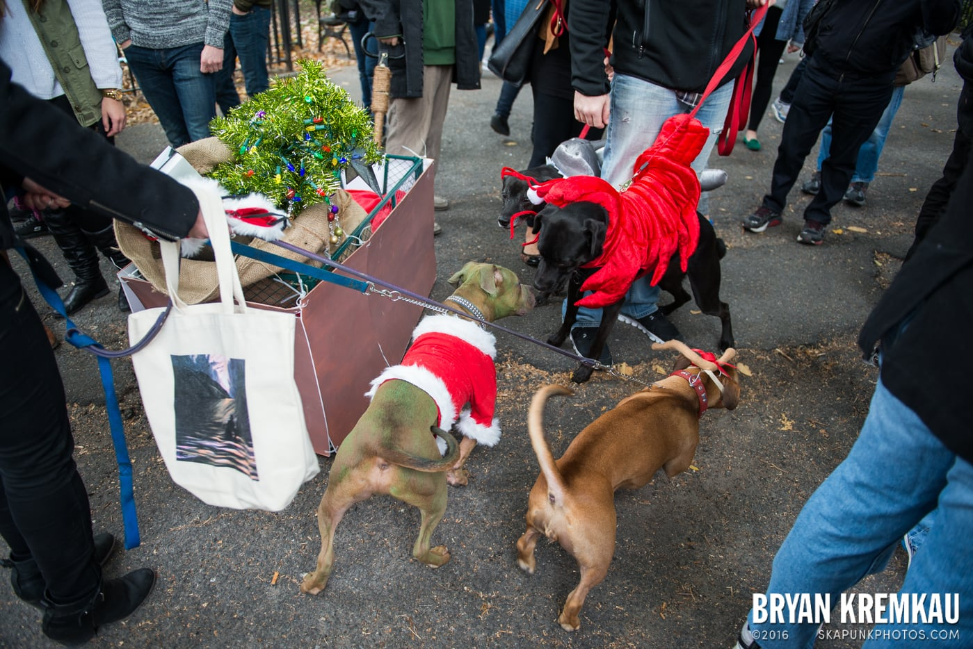 Tompkins Square Halloween Dog Parade 2015 @ Tompkins Square Park, NYC – 10.24.15 (28)
