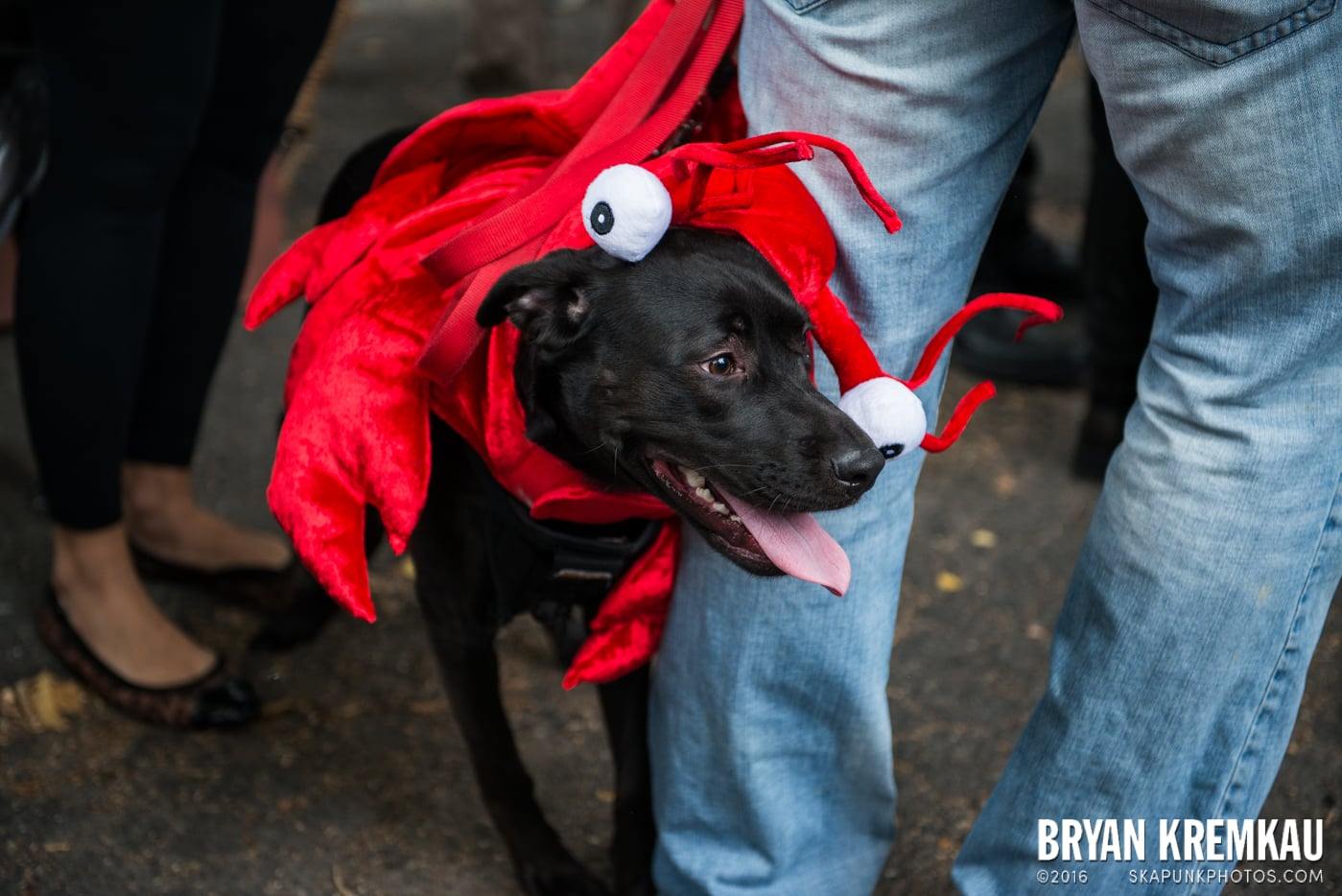 Tompkins Square Halloween Dog Parade 2015 @ Tompkins Square Park, NYC – 10.24.15 (27)