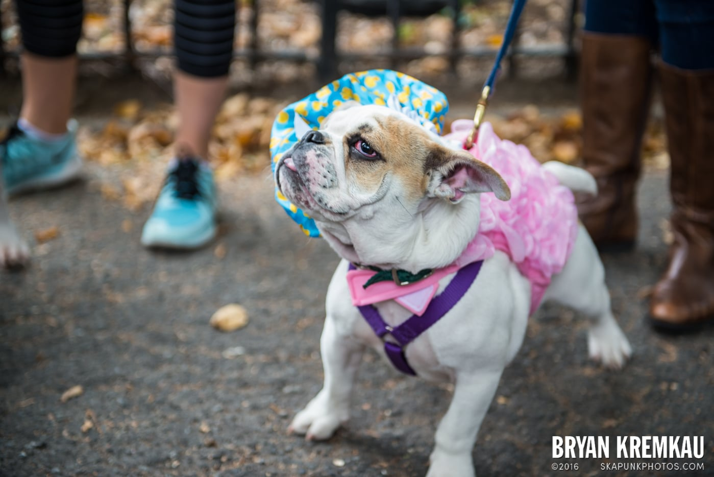 Tompkins Square Halloween Dog Parade 2015 @ Tompkins Square Park, NYC – 10.24.15 (26)