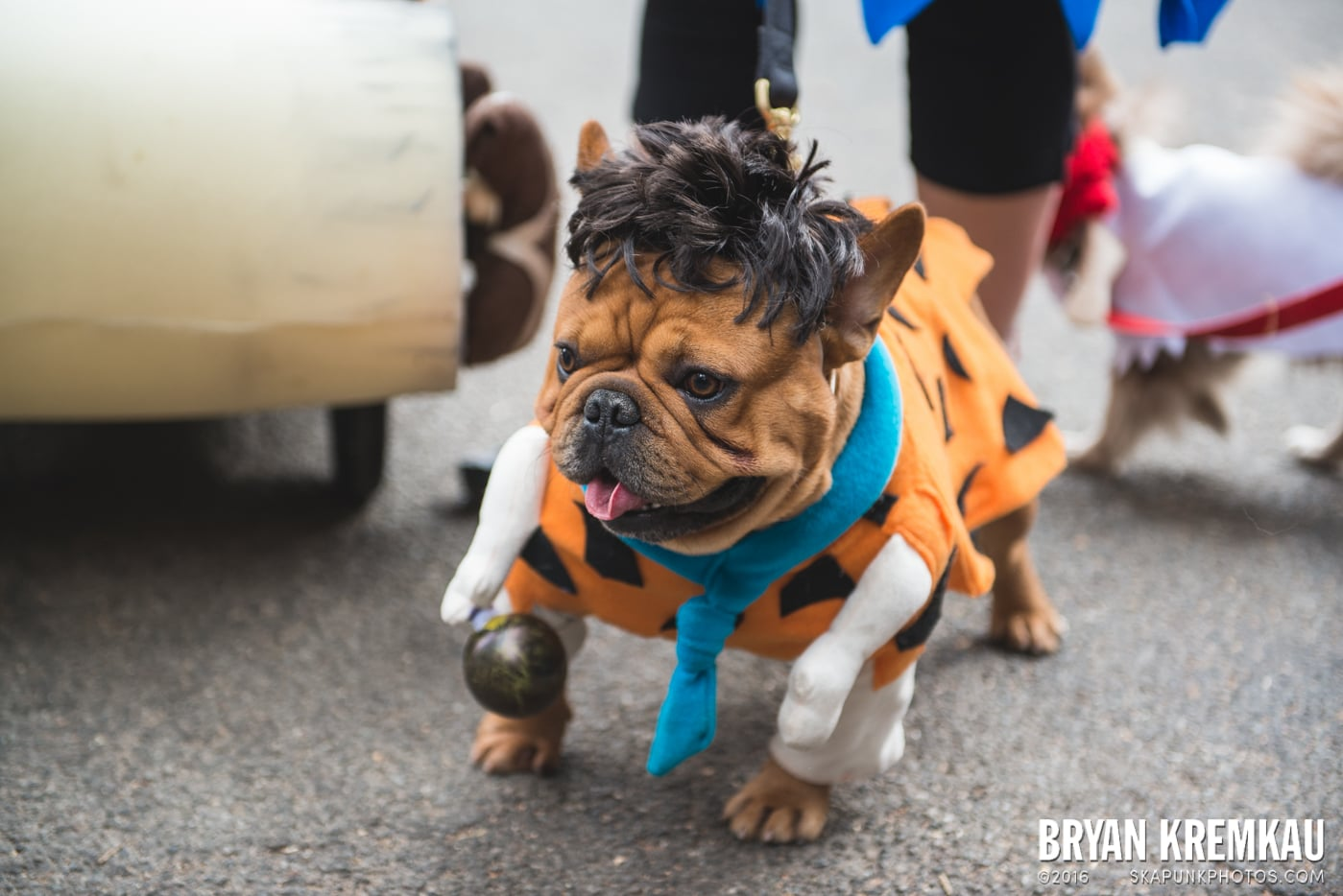 Tompkins Square Halloween Dog Parade 2015 @ Tompkins Square Park, NYC – 10.24.15 (23)