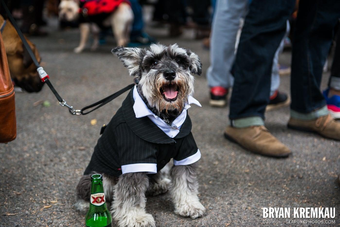 Tompkins Square Halloween Dog Parade 2015 @ Tompkins Square Park, NYC – 10.24.15 (22)
