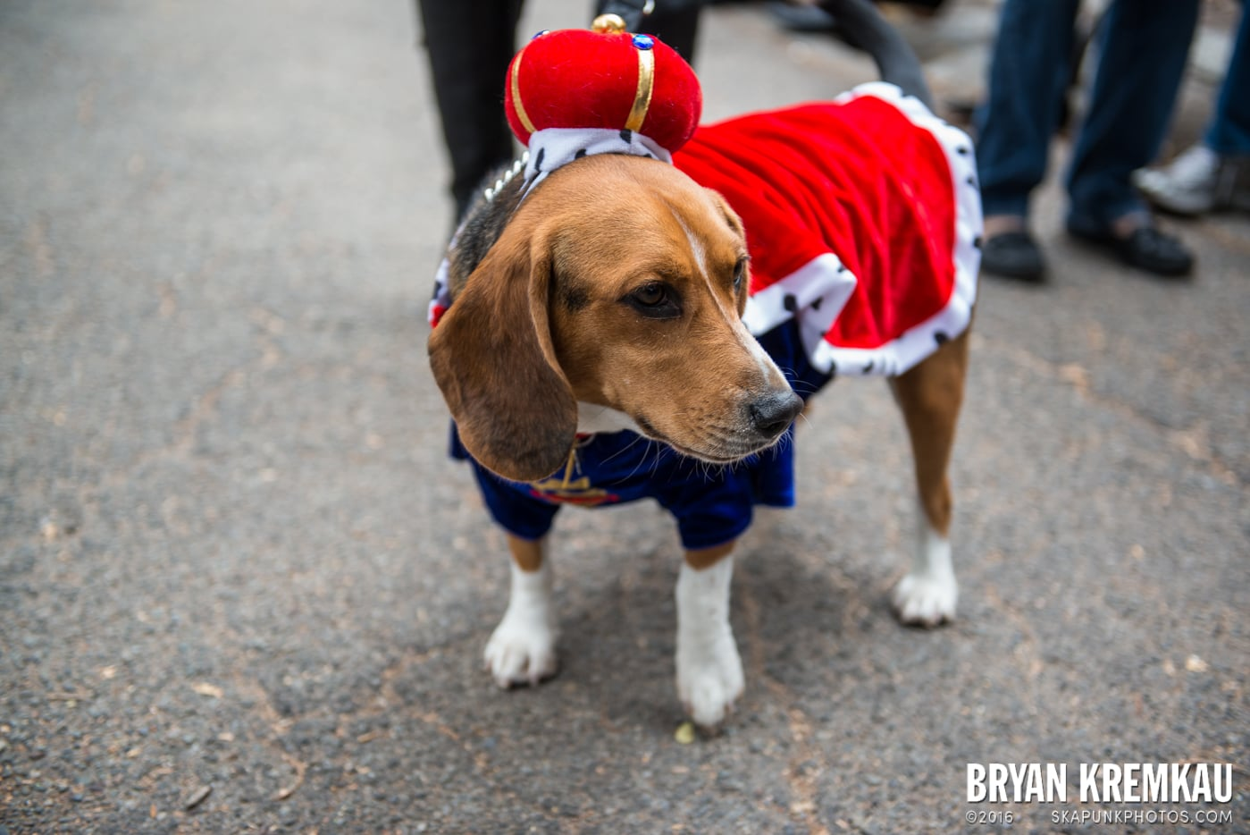 Tompkins Square Halloween Dog Parade 2015 @ Tompkins Square Park, NYC – 10.24.15 (20)
