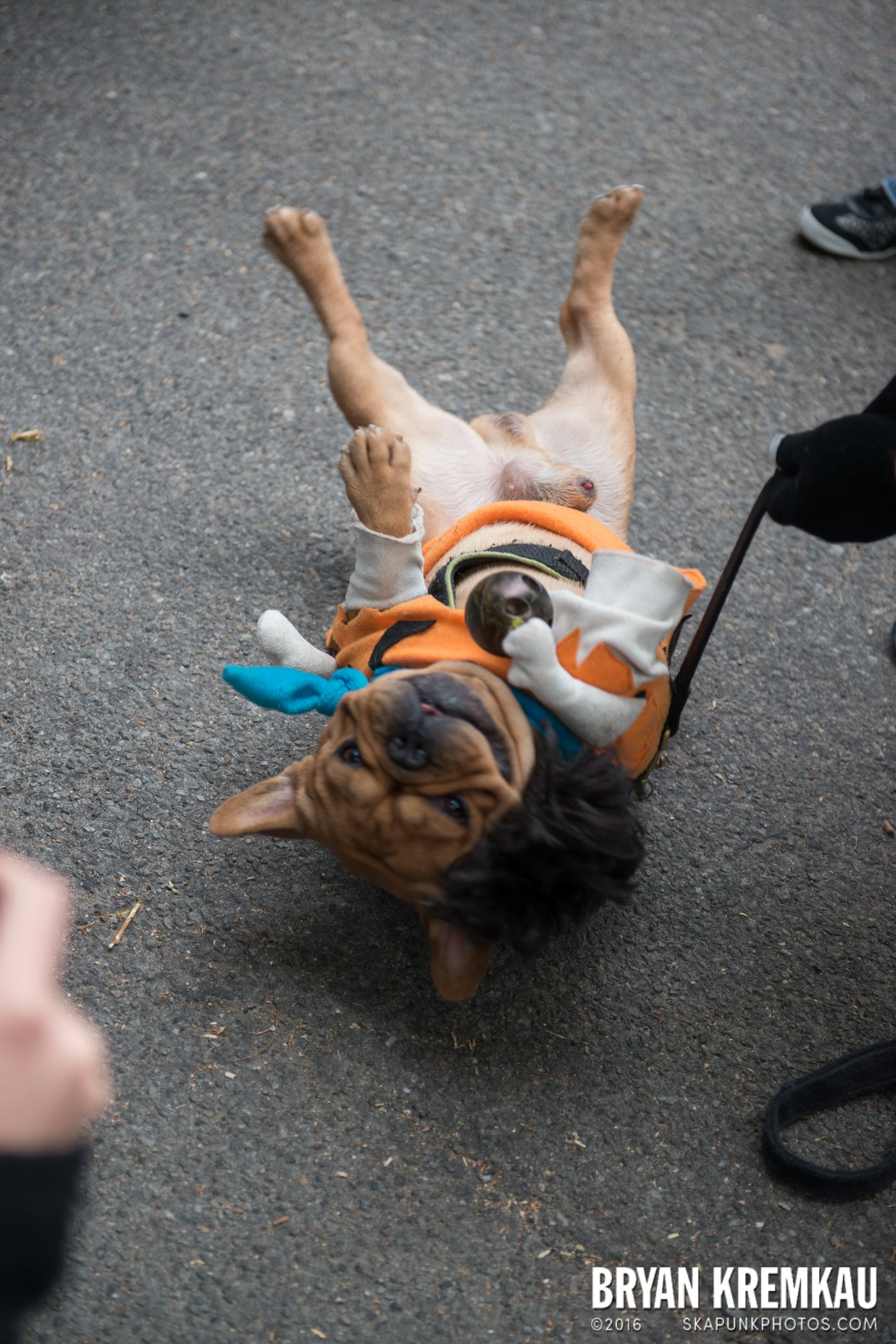 Tompkins Square Halloween Dog Parade 2015 @ Tompkins Square Park, NYC – 10.24.15 (19)