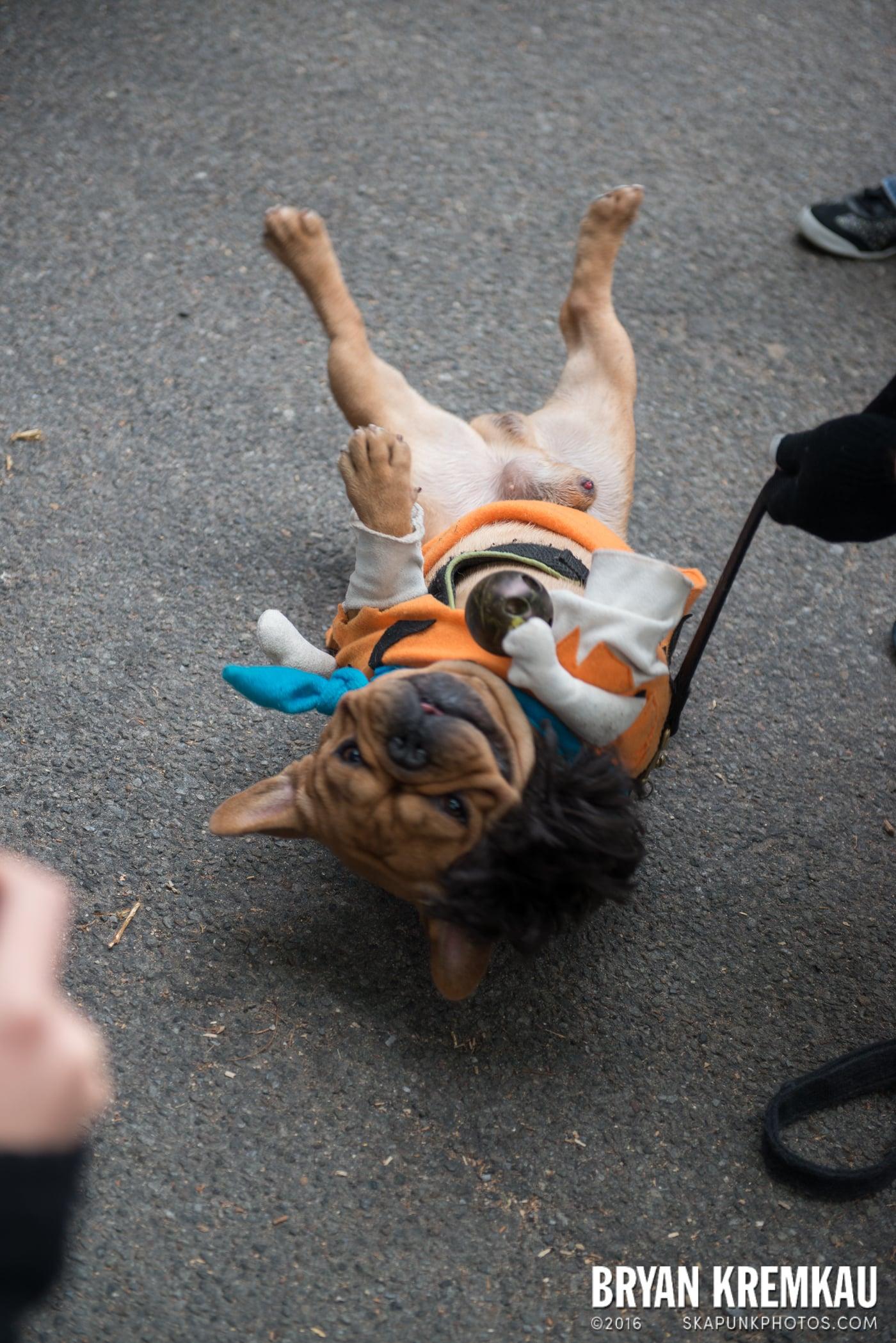 Tompkins Square Halloween Dog Parade 2015 @ Tompkins Square Park, NYC – 10.24.15 (19)