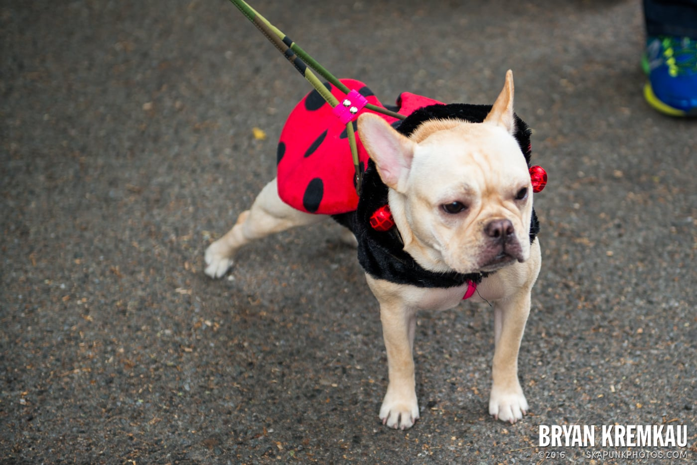 Tompkins Square Halloween Dog Parade 2015 @ Tompkins Square Park, NYC – 10.24.15 (15)