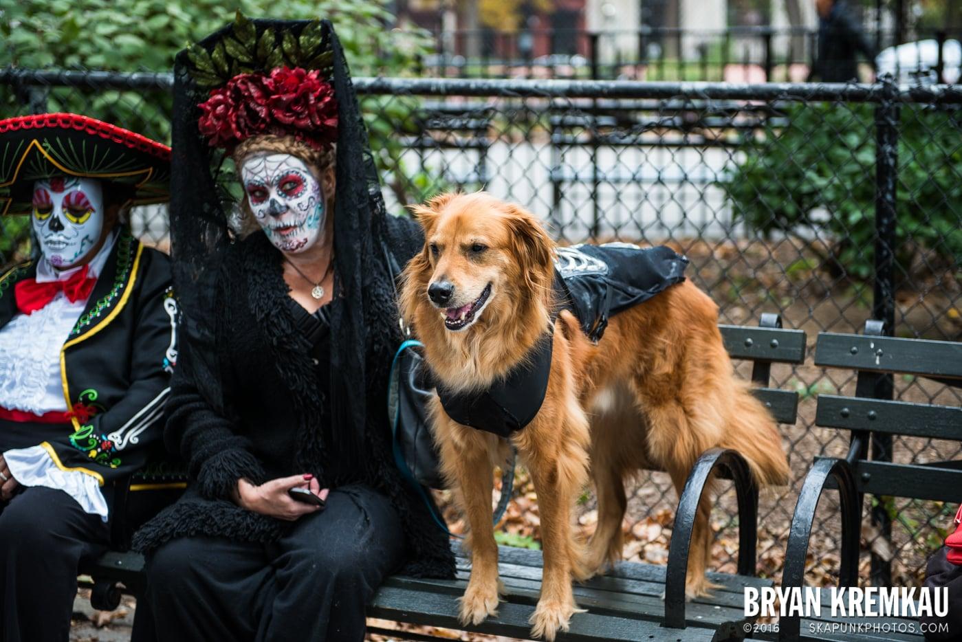 Tompkins Square Halloween Dog Parade 2015 @ Tompkins Square Park, NYC – 10.24.15 (14)
