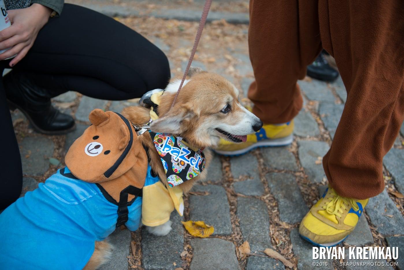 Tompkins Square Halloween Dog Parade 2015 @ Tompkins Square Park, NYC – 10.24.15 (12)