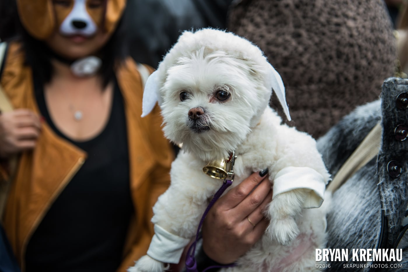 Tompkins Square Halloween Dog Parade 2015 @ Tompkins Square Park, NYC – 10.24.15 (11)