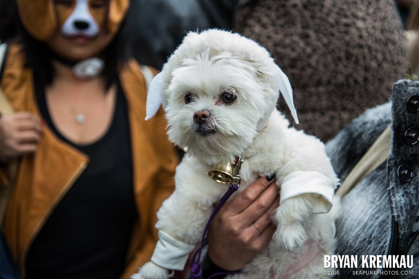 Tompkins Square Halloween Dog Parade 2015 @ Tompkins Square Park, NYC – 10.24.15 (11)