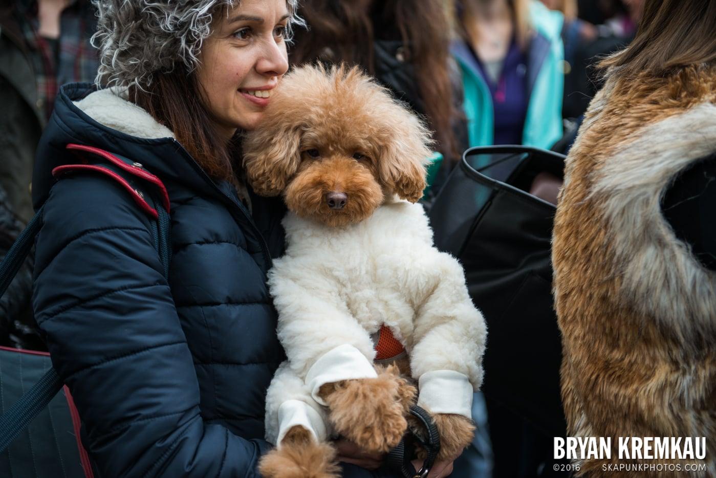 Tompkins Square Halloween Dog Parade 2015 @ Tompkins Square Park, NYC – 10.24.15 (9)