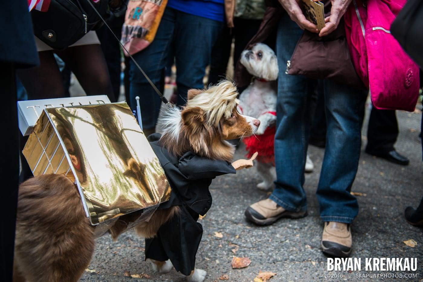 Tompkins Square Halloween Dog Parade 2015 @ Tompkins Square Park, NYC – 10.24.15 (8)