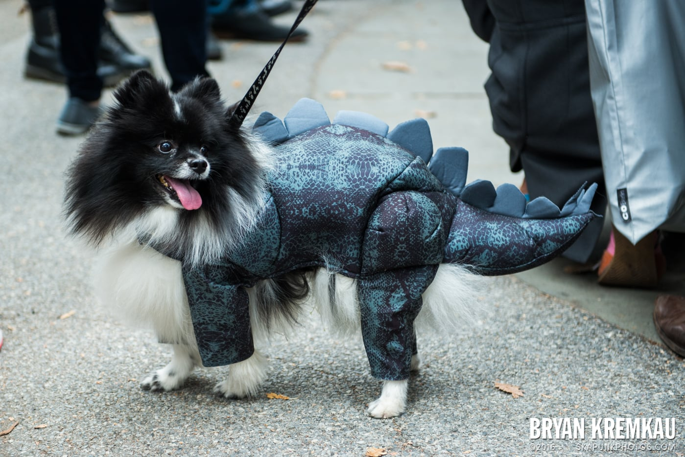 Tompkins Square Halloween Dog Parade 2015 @ Tompkins Square Park, NYC – 10.24.15 (7)