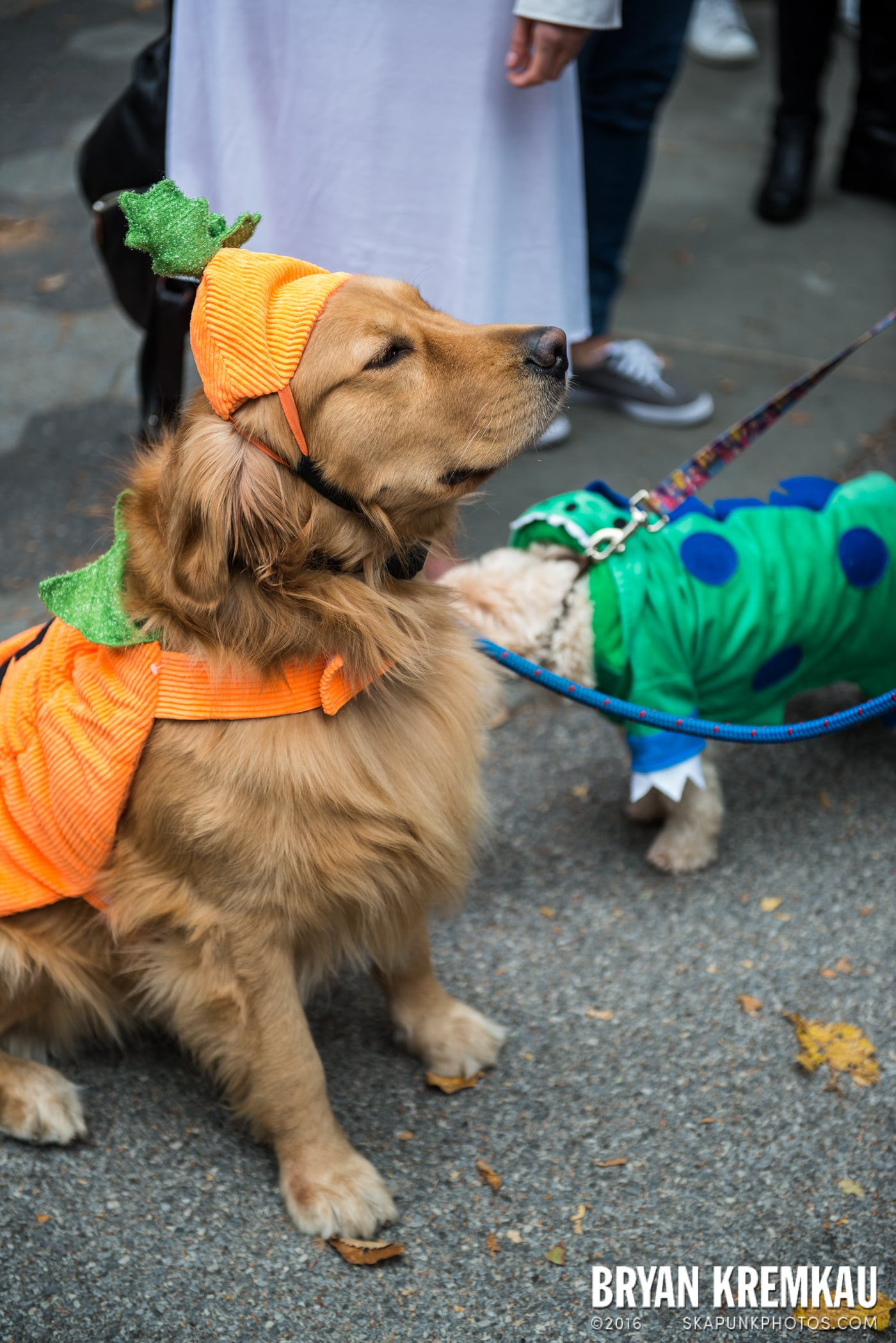 Tompkins Square Halloween Dog Parade 2015 @ Tompkins Square Park, NYC – 10.24.15 (6)