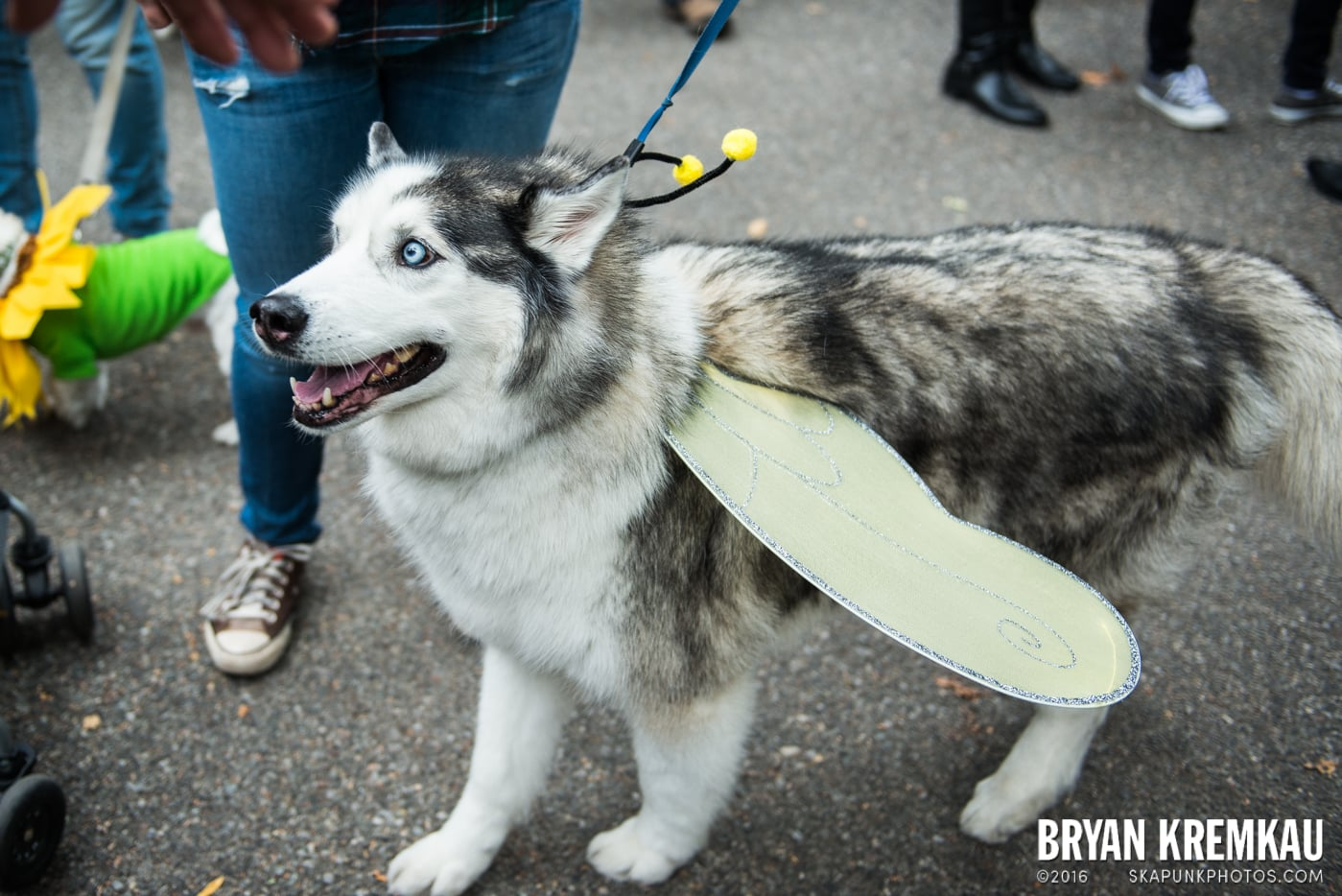 Tompkins Square Halloween Dog Parade 2015 @ Tompkins Square Park, NYC – 10.24.15 (5)
