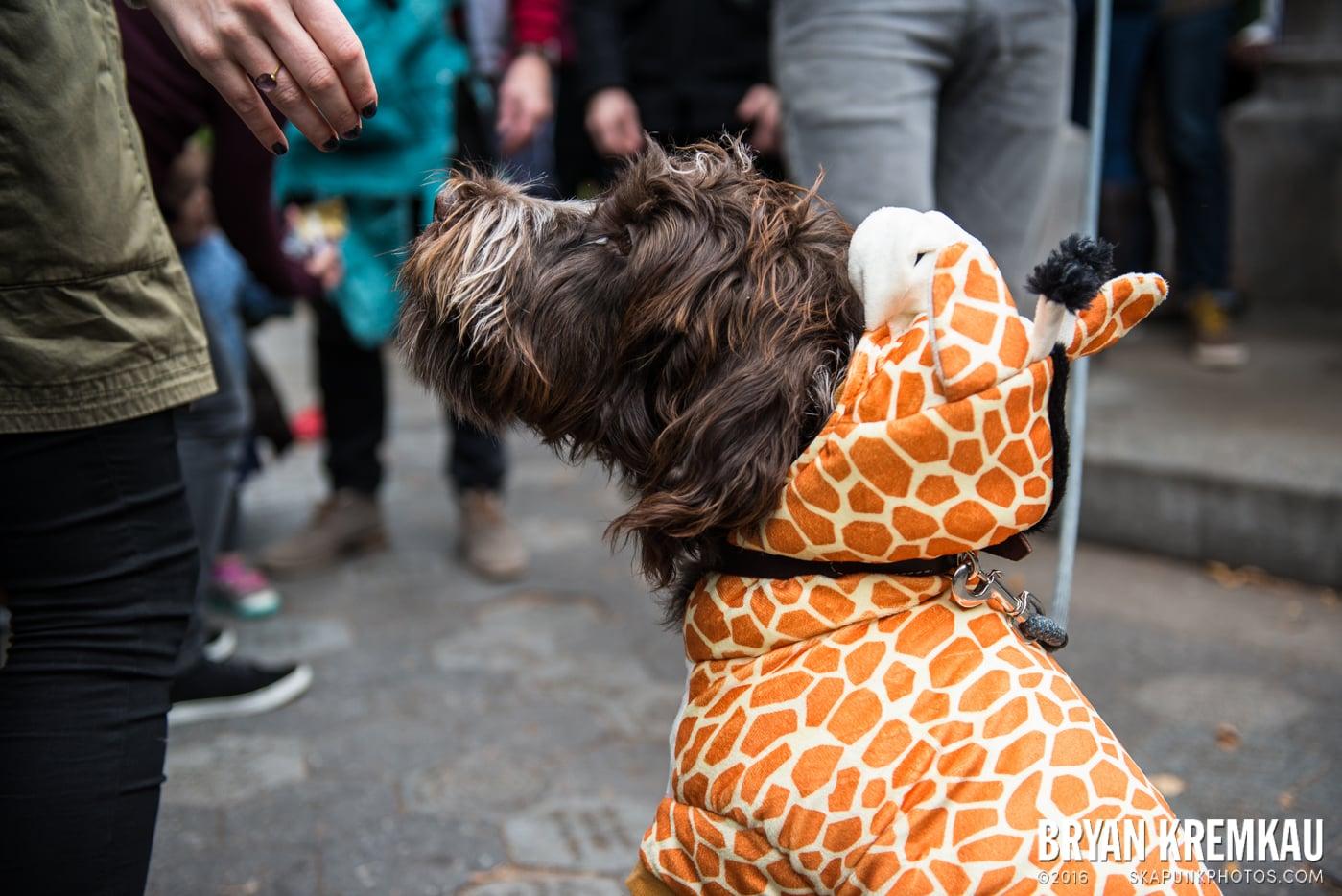 Tompkins Square Halloween Dog Parade 2015 @ Tompkins Square Park, NYC – 10.24.15 (3)