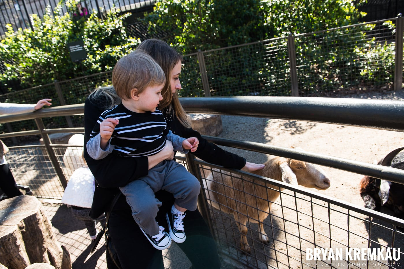 Central Park Zoo @ Central Park, NYC - 4.9.17 (25)