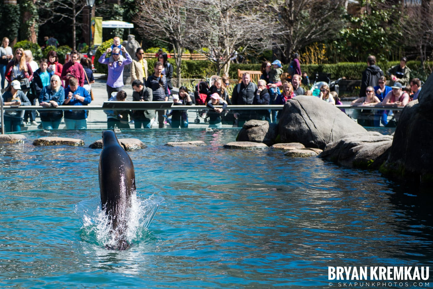 Central Park Zoo @ Central Park, NYC - 4.9.17 (21)