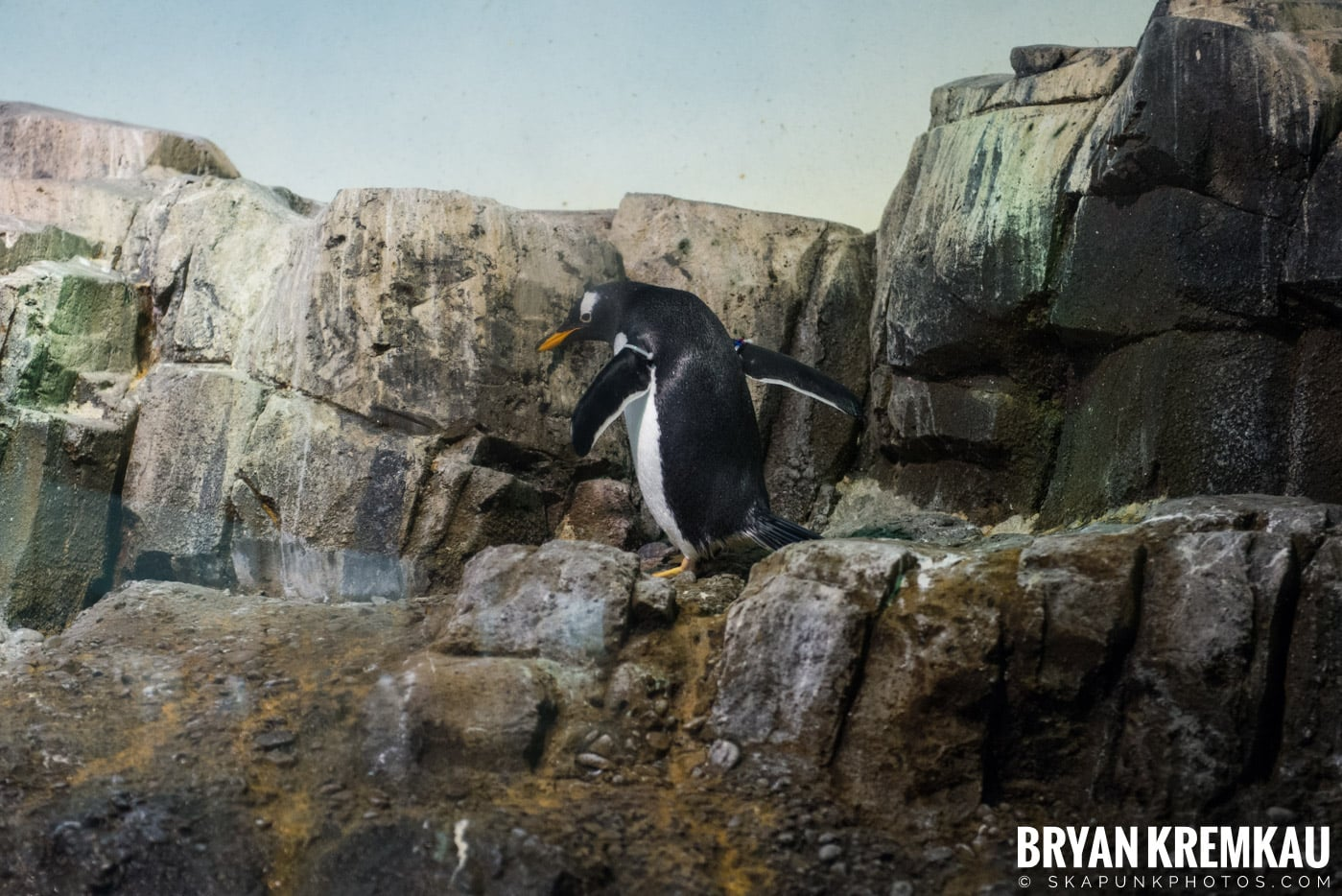 Central Park Zoo @ Central Park, NYC - 4.9.17 (12)