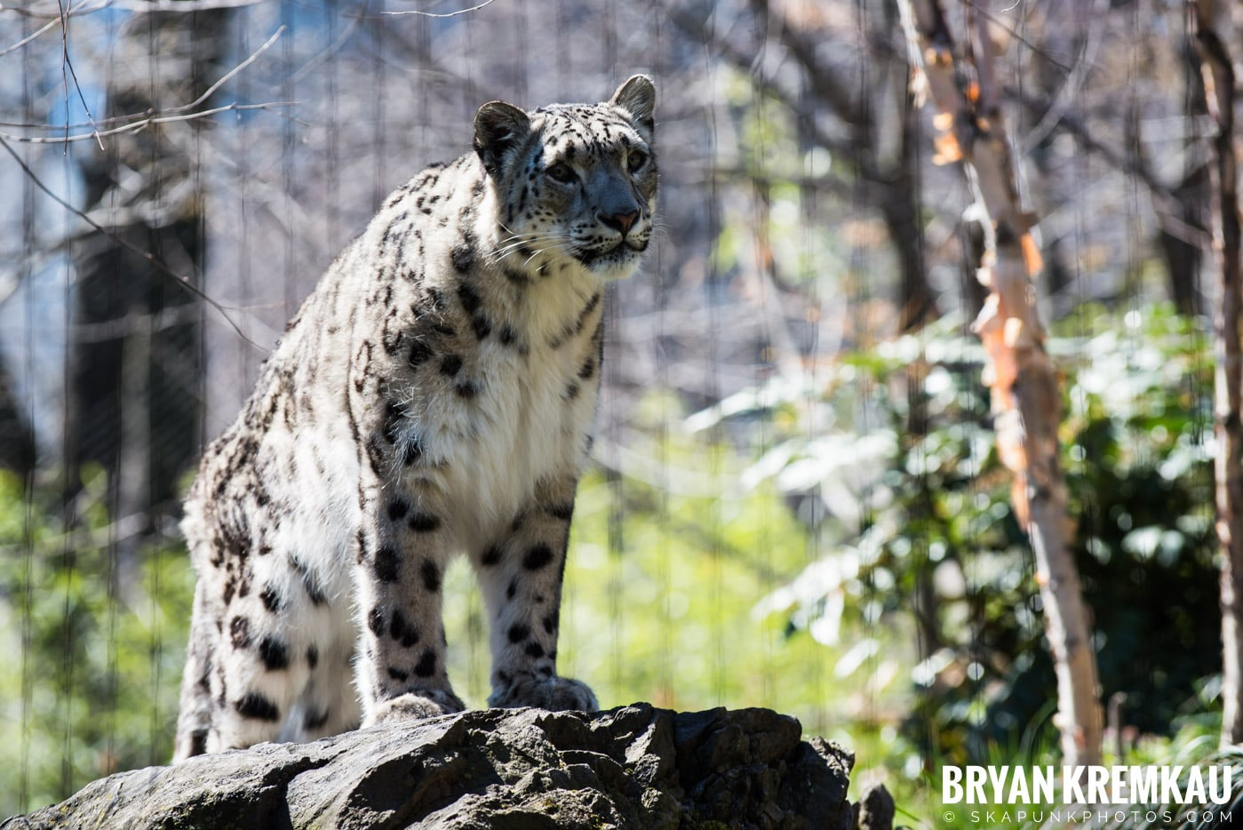 Central Park Zoo @ Central Park, NYC - 4.9.17 (7)