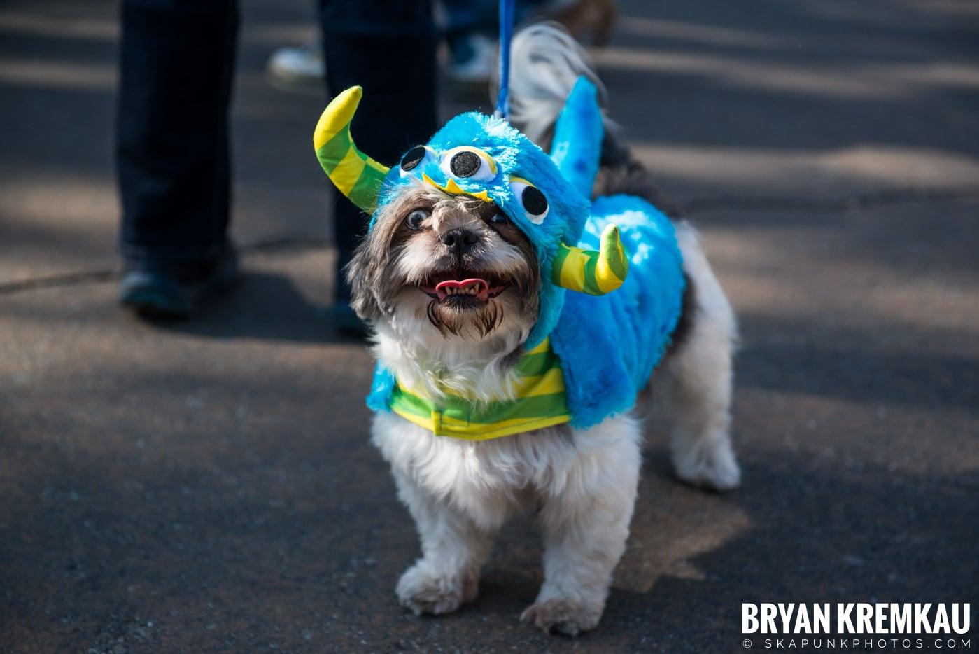 Tompkins Square Park Halloween Dog Parade 2017 @ Tompkins Square Park, NYC - 10.21.17 (53)