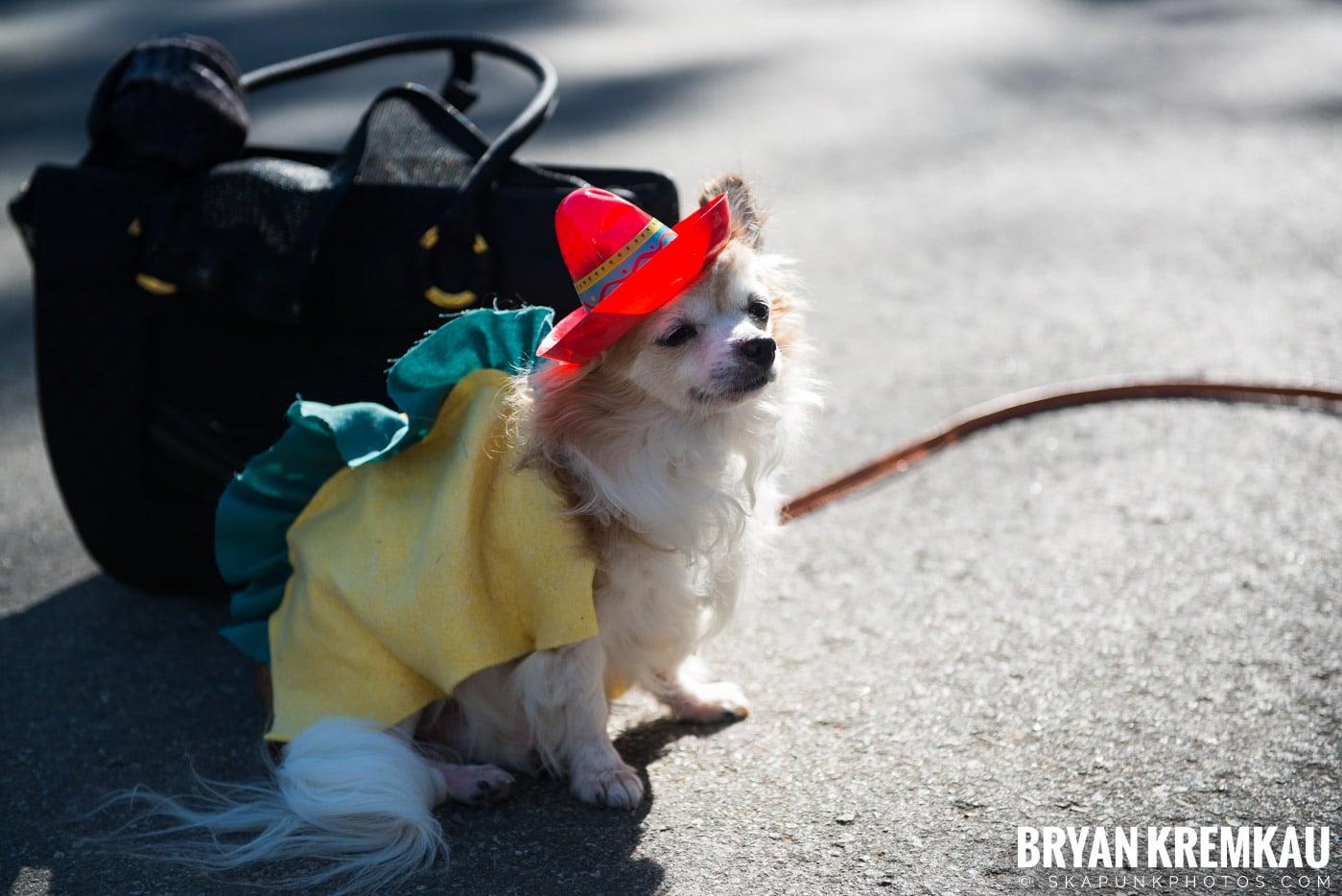 Tompkins Square Park Halloween Dog Parade 2017 @ Tompkins Square Park, NYC - 10.21.17 (52)