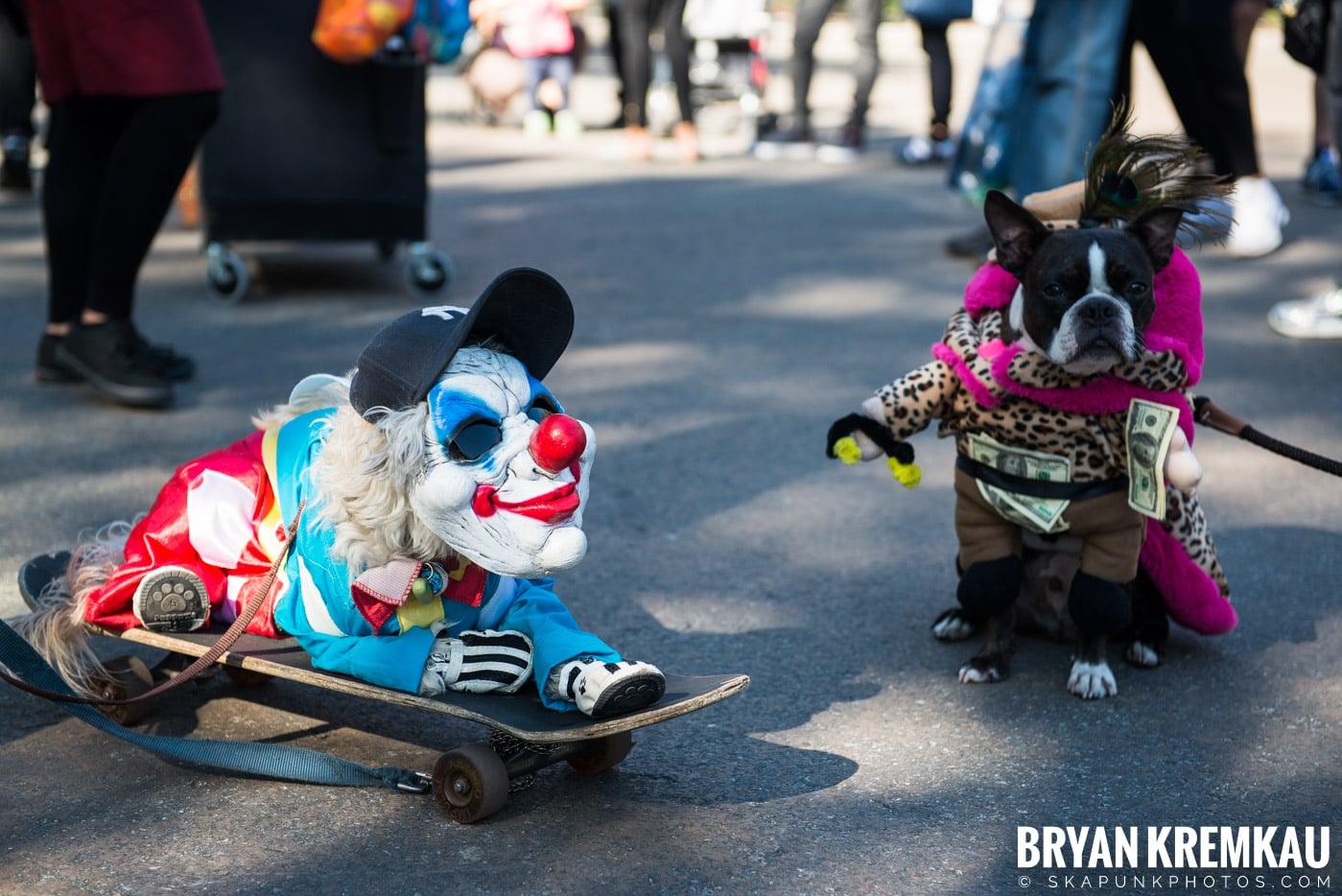 Tompkins Square Park Halloween Dog Parade 2017 @ Tompkins Square Park, NYC - 10.21.17 (49)