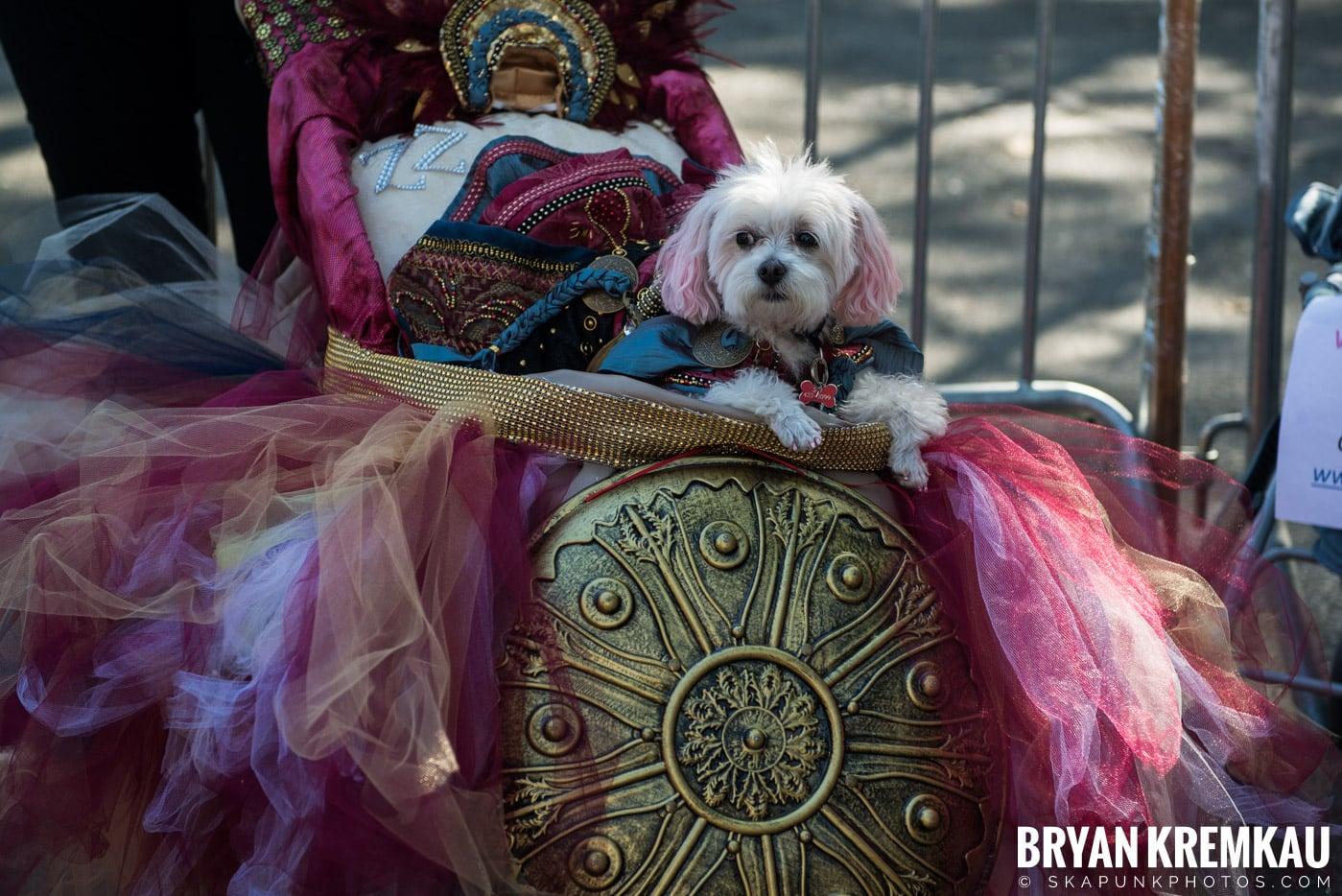 Tompkins Square Park Halloween Dog Parade 2017 @ Tompkins Square Park, NYC - 10.21.17 (48)