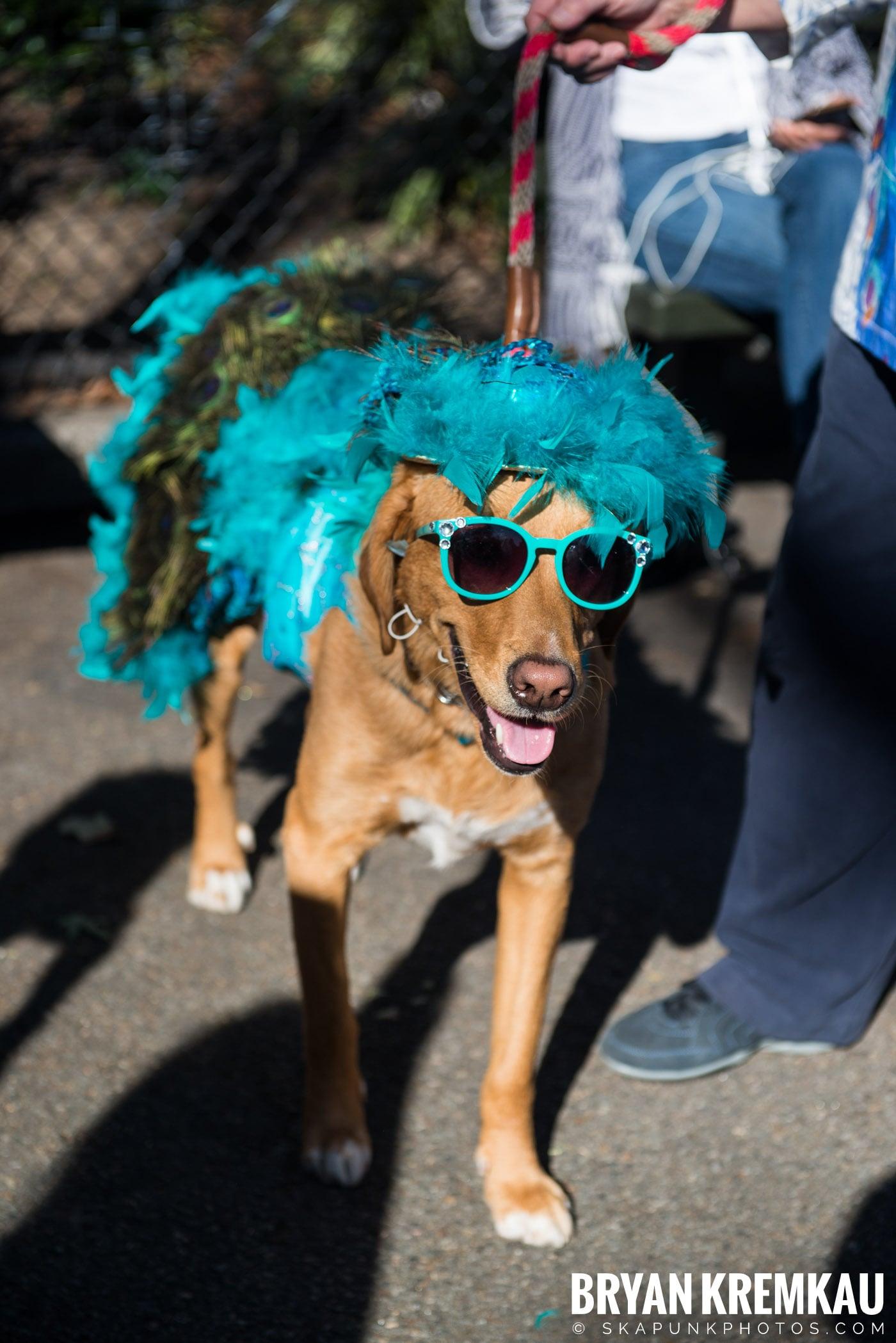 Tompkins Square Park Halloween Dog Parade 2017 @ Tompkins Square Park, NYC - 10.21.17 (46)