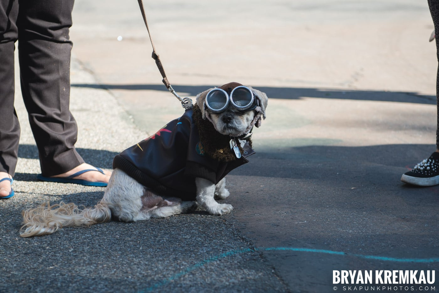 Tompkins Square Park Halloween Dog Parade 2017 @ Tompkins Square Park, NYC - 10.21.17 (44)