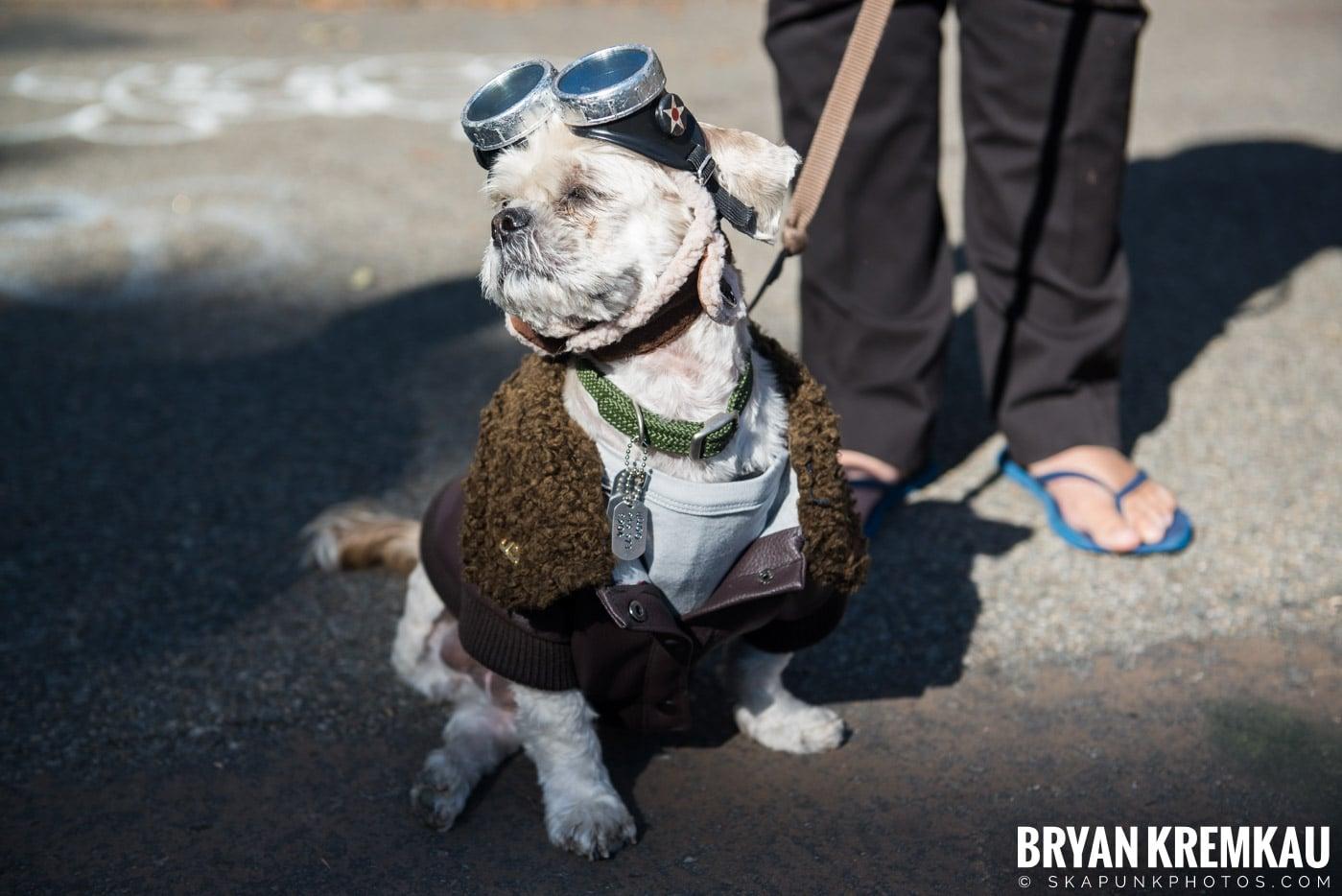 Tompkins Square Park Halloween Dog Parade 2017 @ Tompkins Square Park, NYC - 10.21.17 (43)