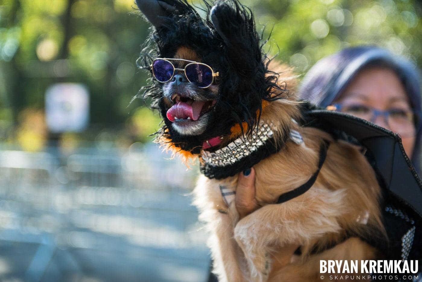 Tompkins Square Park Halloween Dog Parade 2017 @ Tompkins Square Park, NYC - 10.21.17 (42)