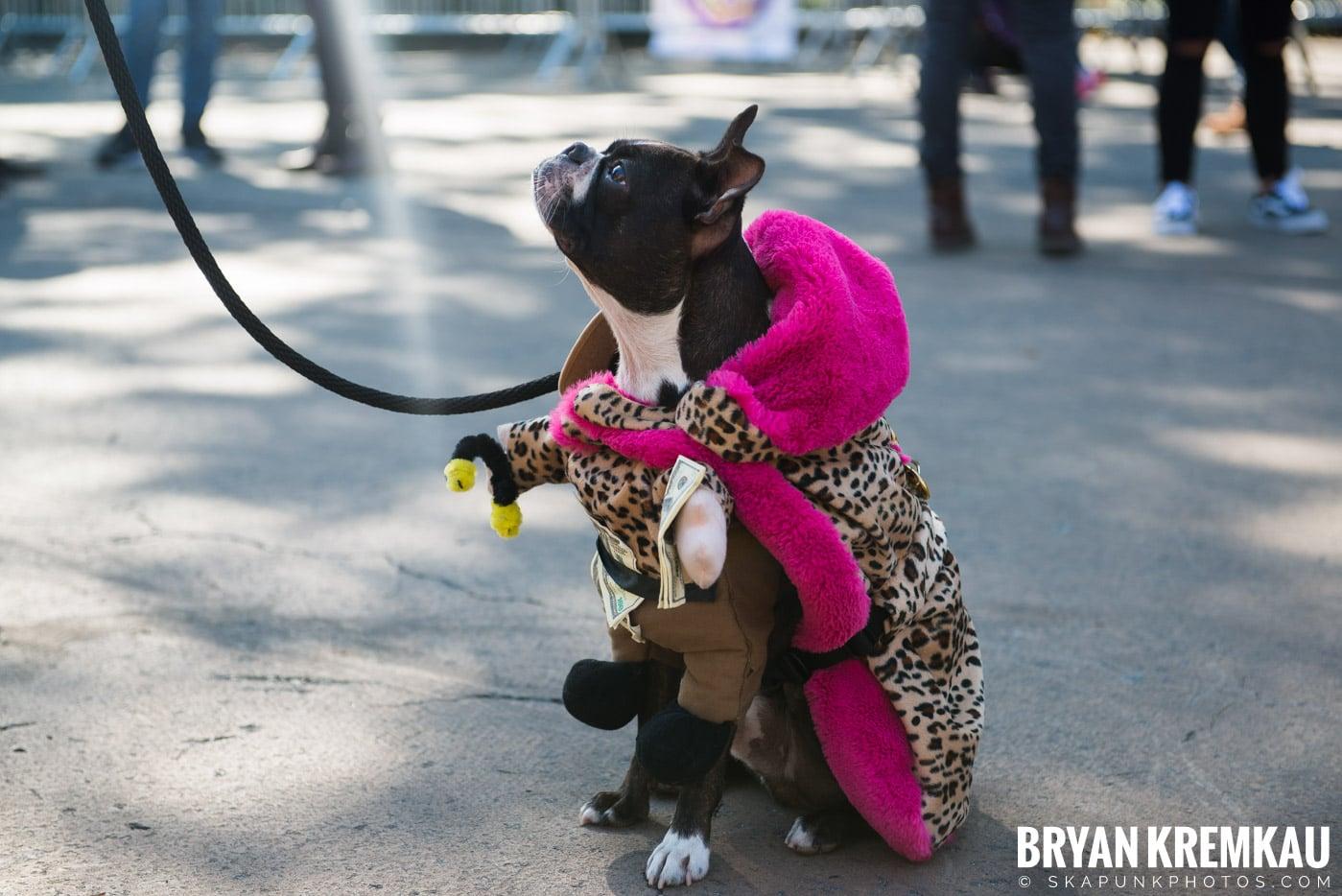 Tompkins Square Park Halloween Dog Parade 2017 @ Tompkins Square Park, NYC - 10.21.17 (40)
