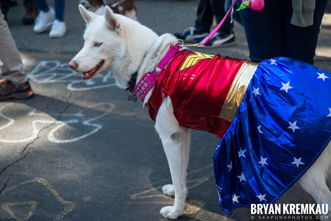 Tompkins Square Park Halloween Dog Parade 2017 @ Tompkins Square Park, NYC - 10.21.17 (39)