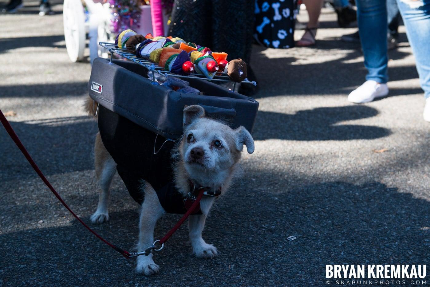 Tompkins Square Park Halloween Dog Parade 2017 @ Tompkins Square Park, NYC - 10.21.17 (36)