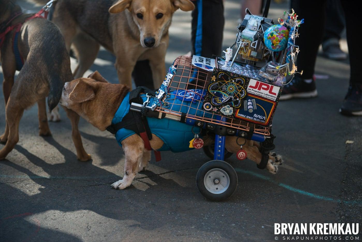 Tompkins Square Park Halloween Dog Parade 2017 @ Tompkins Square Park, NYC - 10.21.17 (32)