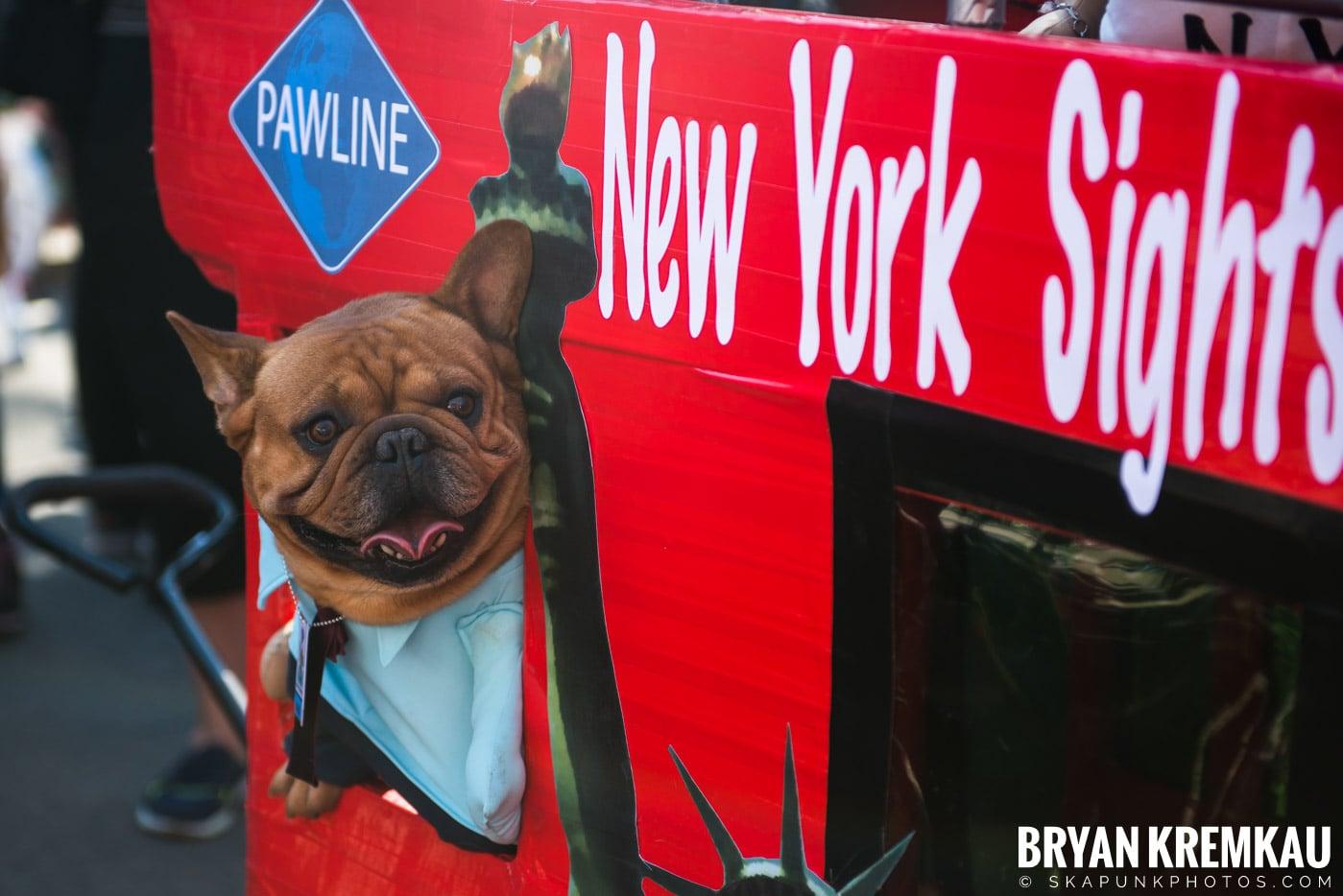 Tompkins Square Park Halloween Dog Parade 2017 @ Tompkins Square Park, NYC - 10.21.17 (31)