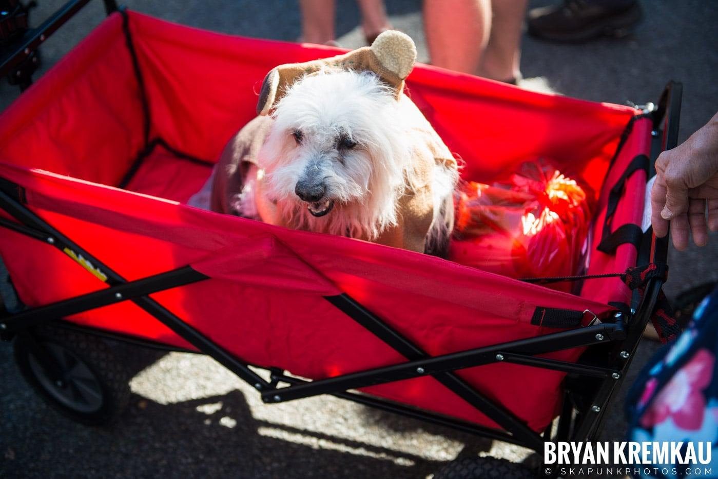 Tompkins Square Park Halloween Dog Parade 2017 @ Tompkins Square Park, NYC - 10.21.17 (28)