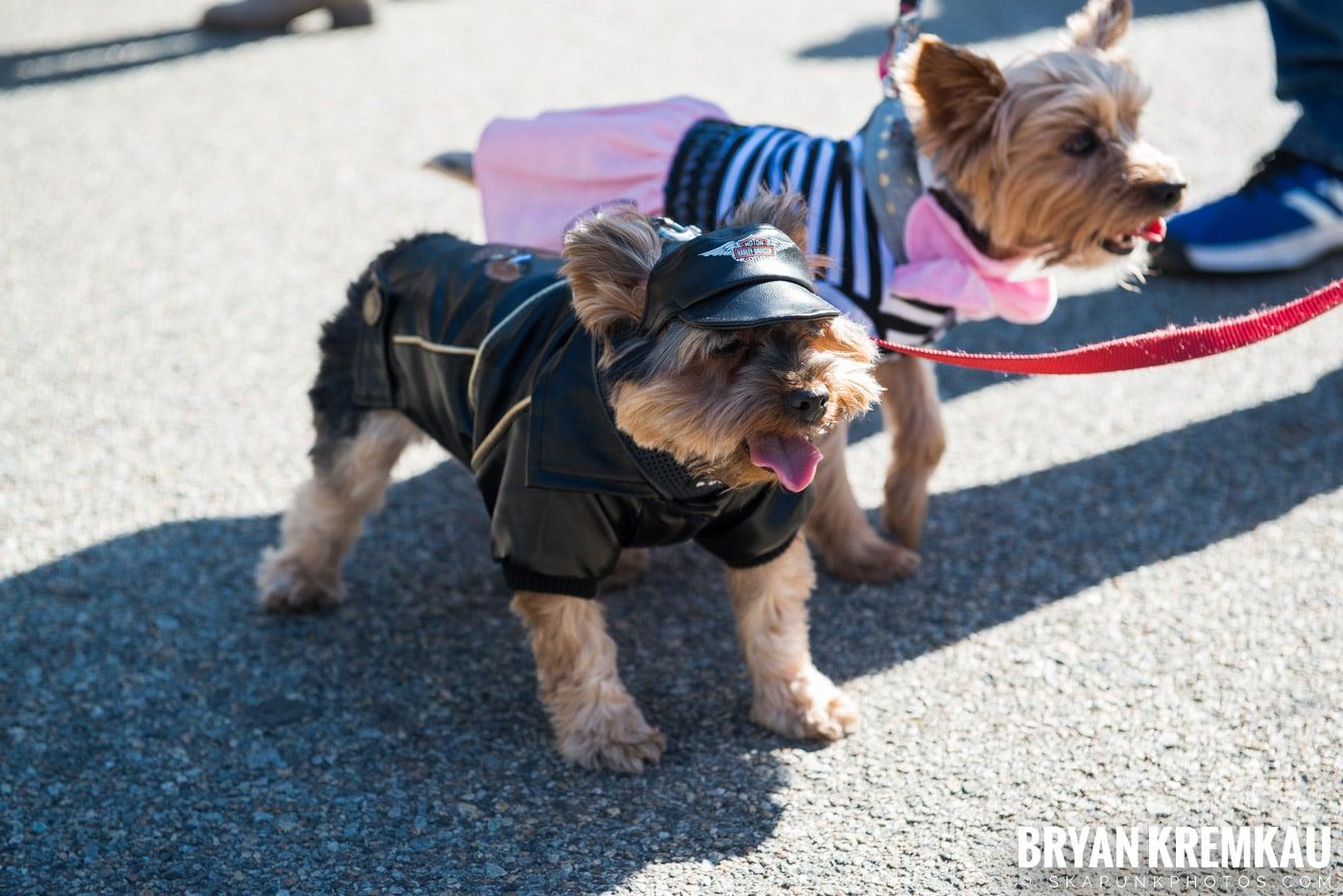 Tompkins Square Park Halloween Dog Parade 2017 @ Tompkins Square Park, NYC - 10.21.17 (23)