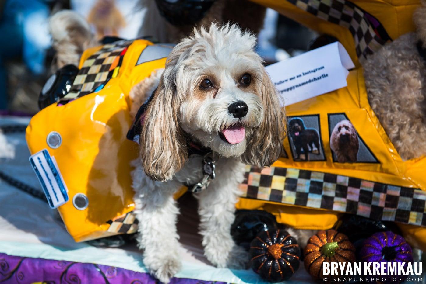 Tompkins Square Park Halloween Dog Parade 2017 @ Tompkins Square Park, NYC - 10.21.17 (21)