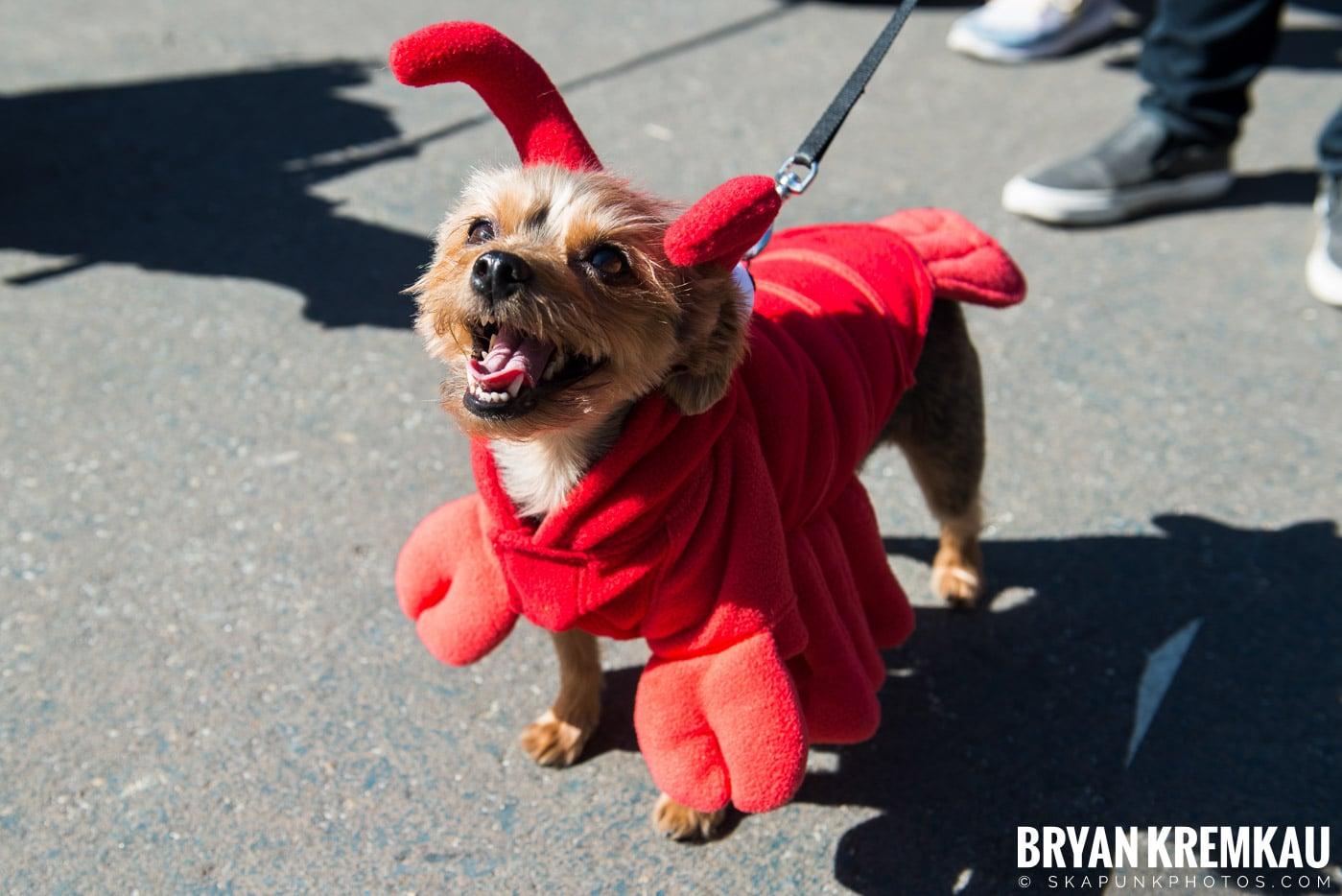 Tompkins Square Park Halloween Dog Parade 2017 @ Tompkins Square Park, NYC - 10.21.17 (20)