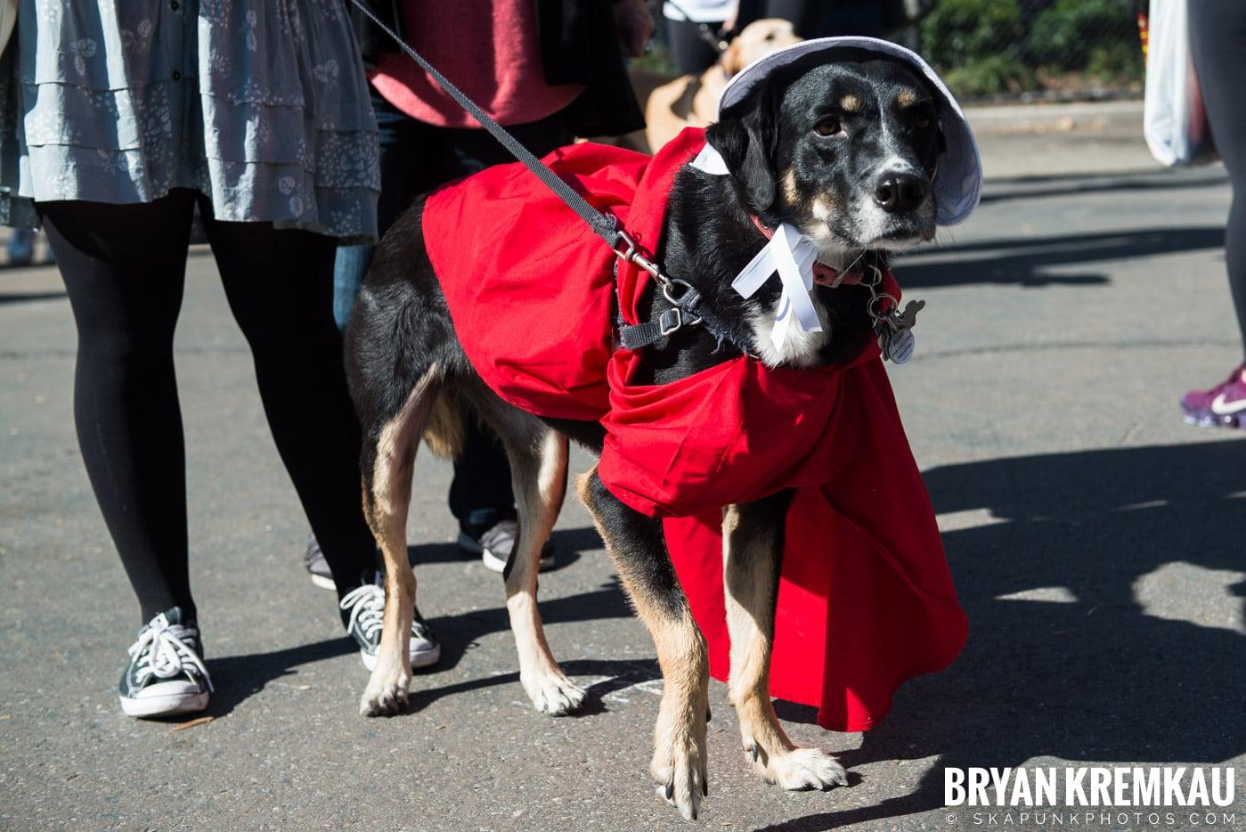 Tompkins Square Park Halloween Dog Parade 2017 @ Tompkins Square Park, NYC - 10.21.17 (19)