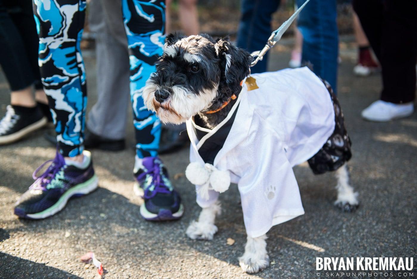 Tompkins Square Park Halloween Dog Parade 2017 @ Tompkins Square Park, NYC - 10.21.17 (16)