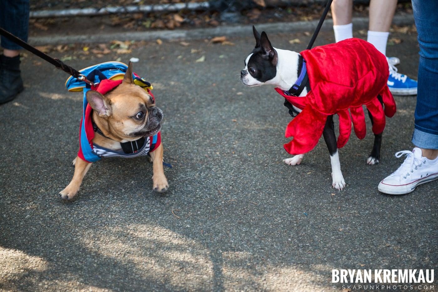 Tompkins Square Park Halloween Dog Parade 2017 @ Tompkins Square Park, NYC - 10.21.17 (15)