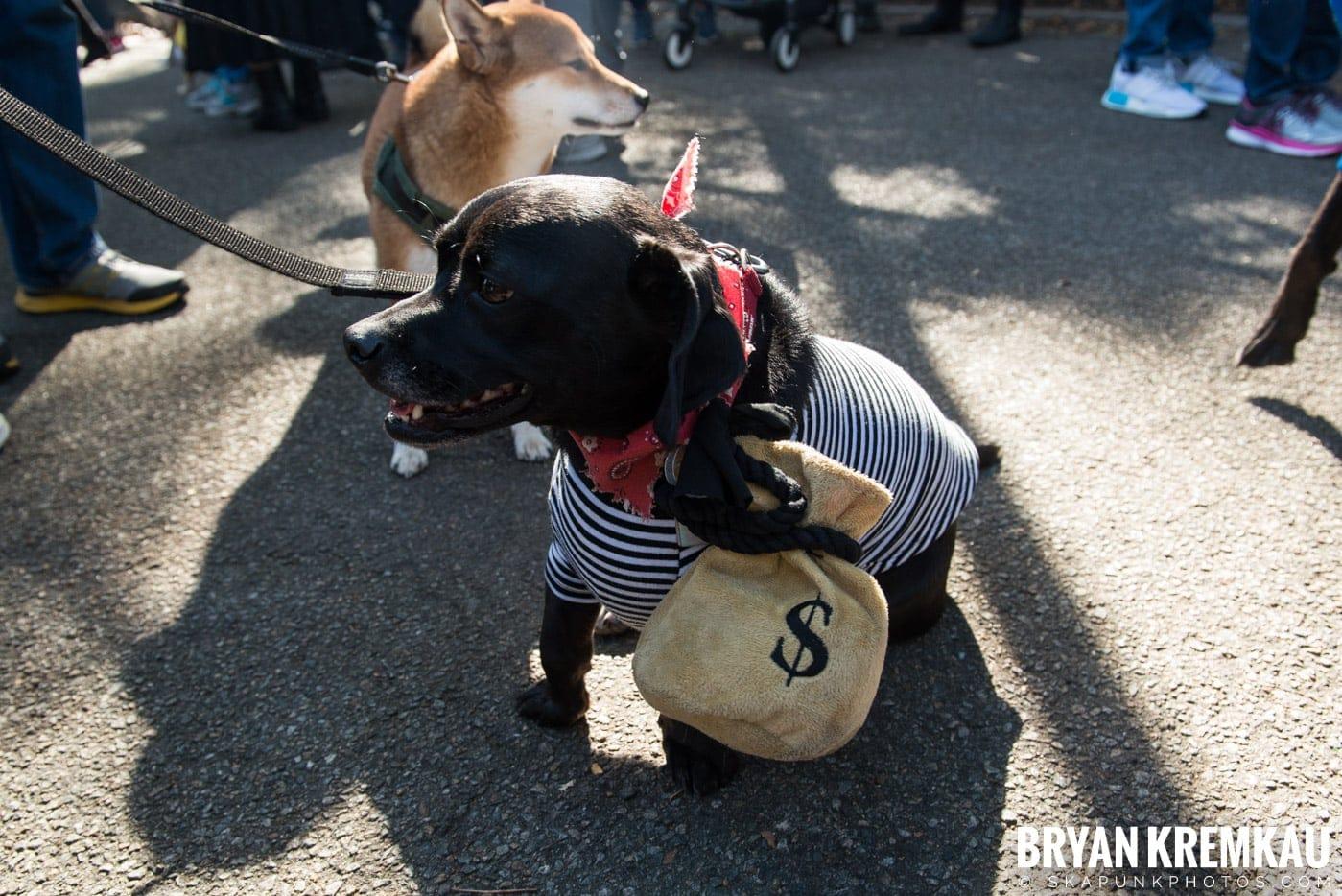 Tompkins Square Park Halloween Dog Parade 2017 @ Tompkins Square Park, NYC - 10.21.17 (12)