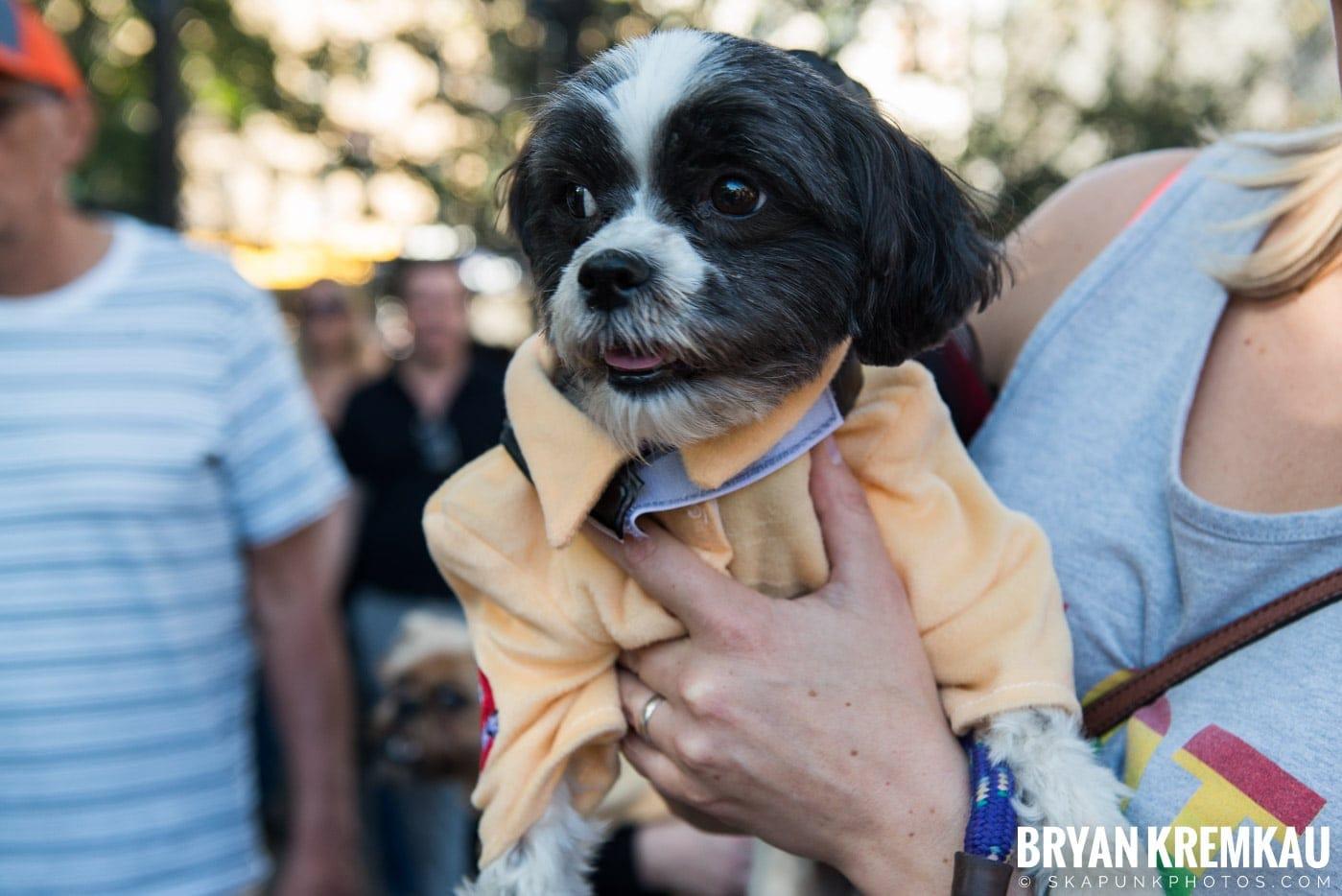 Tompkins Square Park Halloween Dog Parade 2017 @ Tompkins Square Park, NYC - 10.21.17 (11)