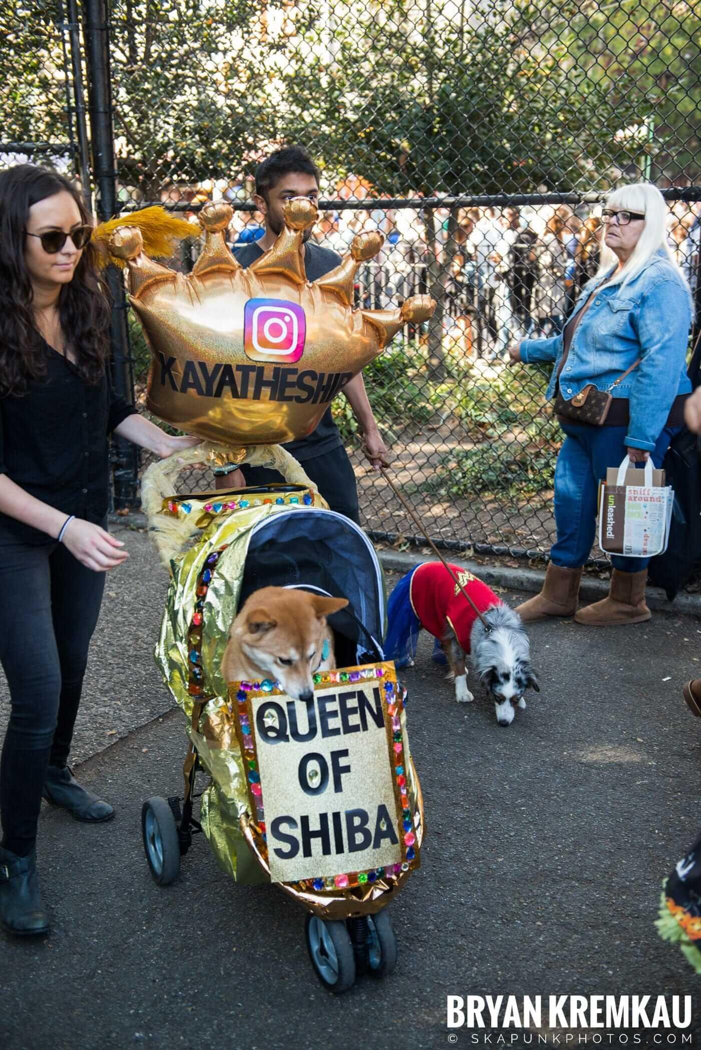 Tompkins Square Park Halloween Dog Parade 2017 @ Tompkins Square Park, NYC - 10.21.17 (1)